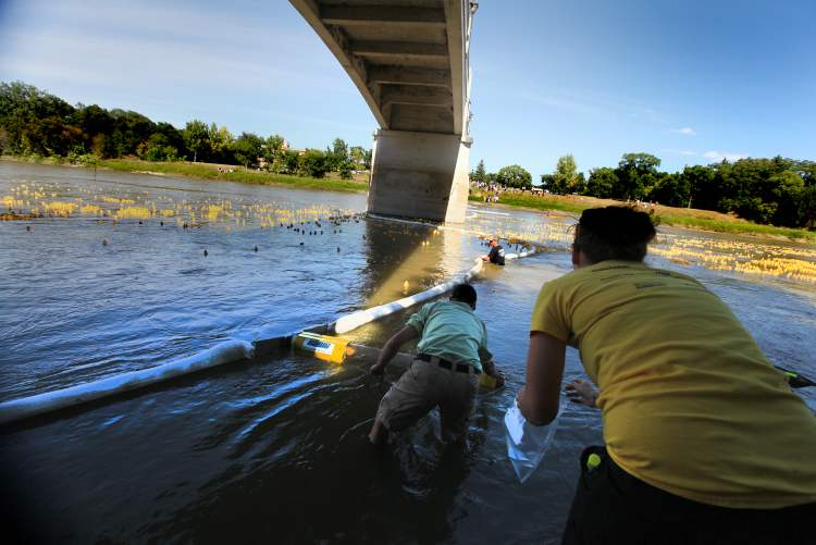 Organizers collect the ducks, which have been purchased by ticket-holders, in order to pronounce the winners. However, thousands of ducks make their way beyond the barrier. (Ruth Bonneville / Winnipeg Free Press)