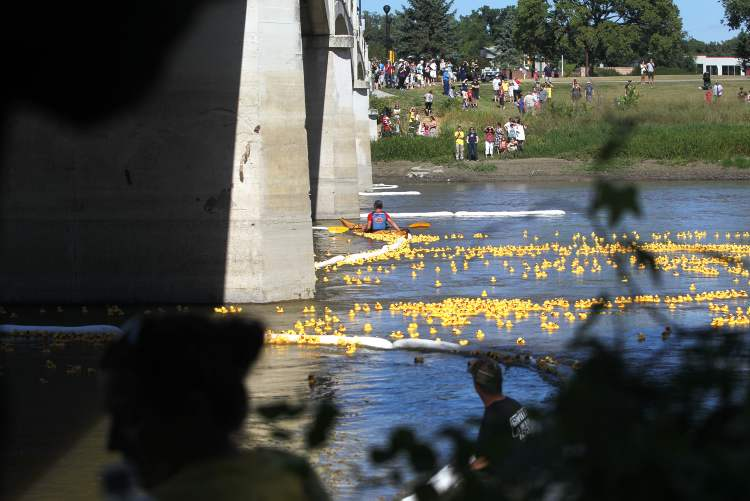 Workers try to contain the ducks inside the floating barrier on the Assiniboine River. (Ruth Bonneville / Winnipeg Free Press)