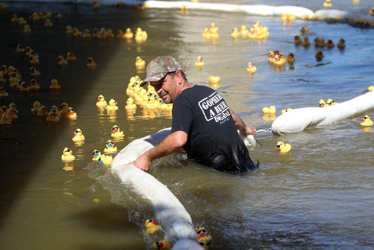 Trying to round up wayward rubber duckies is no easy task. (Ruth Bonneville / Winnipeg Free Press)