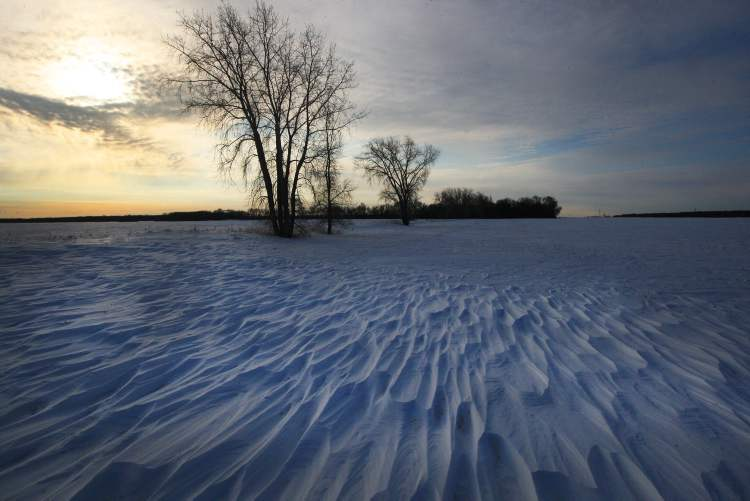 High winds have carved out rows of drifts in the snow of a farmer's field on road 70 east of Highway 6 near Winnipeg.