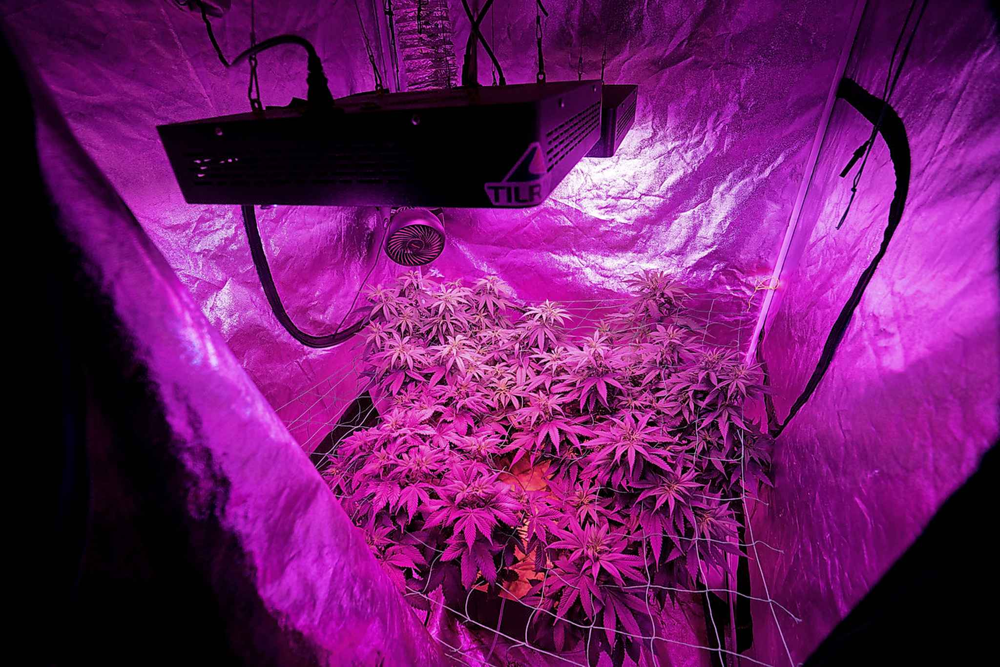 Brad's medical cannabis garden received high marks from Calgary safety inspectors. (Supplied)