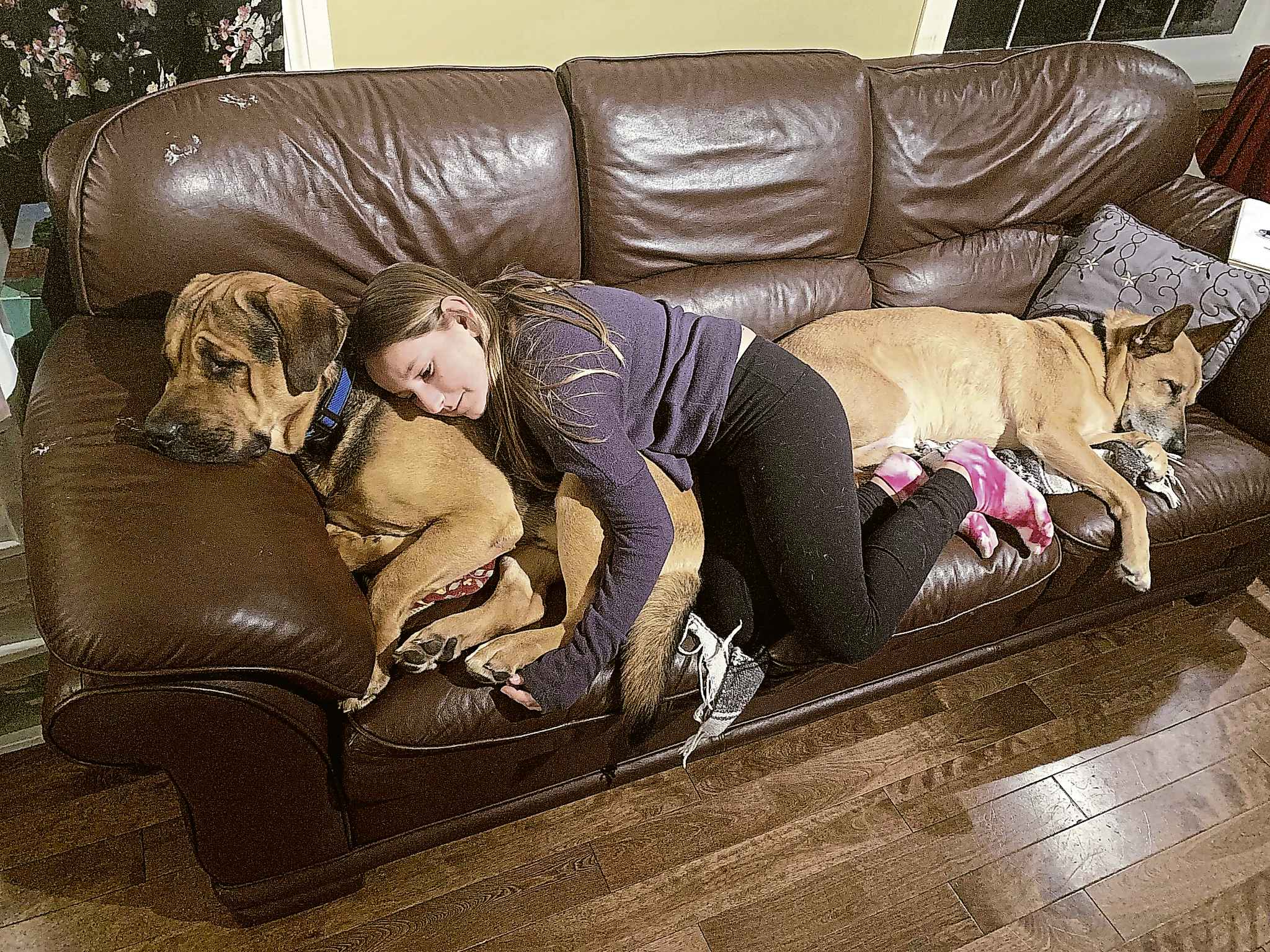 Emily Ross, 11, snuggles with Rosco on the couch while Luke naps on the other end of the couch. Rosco was adopted by the Ross family from animal services after he was rescued Jan. 4 from a dog hoarding situation on Home Street.