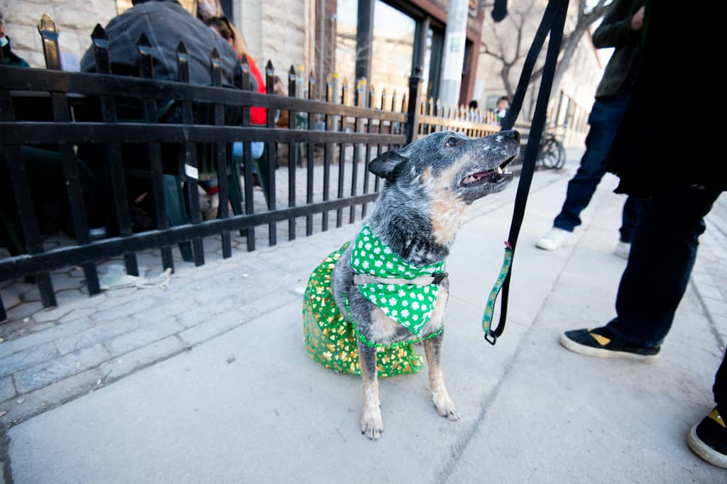 Even dogs got into the act Wednesday evening as a pup wearing festive clothing walks by the patio at The King's Head.