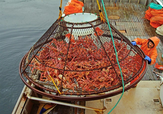 FILE - In this Nov. 6, 2005 file photo, Ralph Strickland guides a crab pot full of red king crabs onto the deck of F/V Frigidland during the current fishery in the waters off of Juneau, Alaska. The release of carbon dioxide into the air from factory smokestacks to the tailpipe on your car could pose a risk to red king crab and other lucrative fisheries in Alaska, a new report says. The research, led by the National Oceanic and Atmospheric Administration, was to be published Tuesday, July 29, 2014, in the online journal Progress in Oceanography. (AP Photo/Klas Stolpe, File)