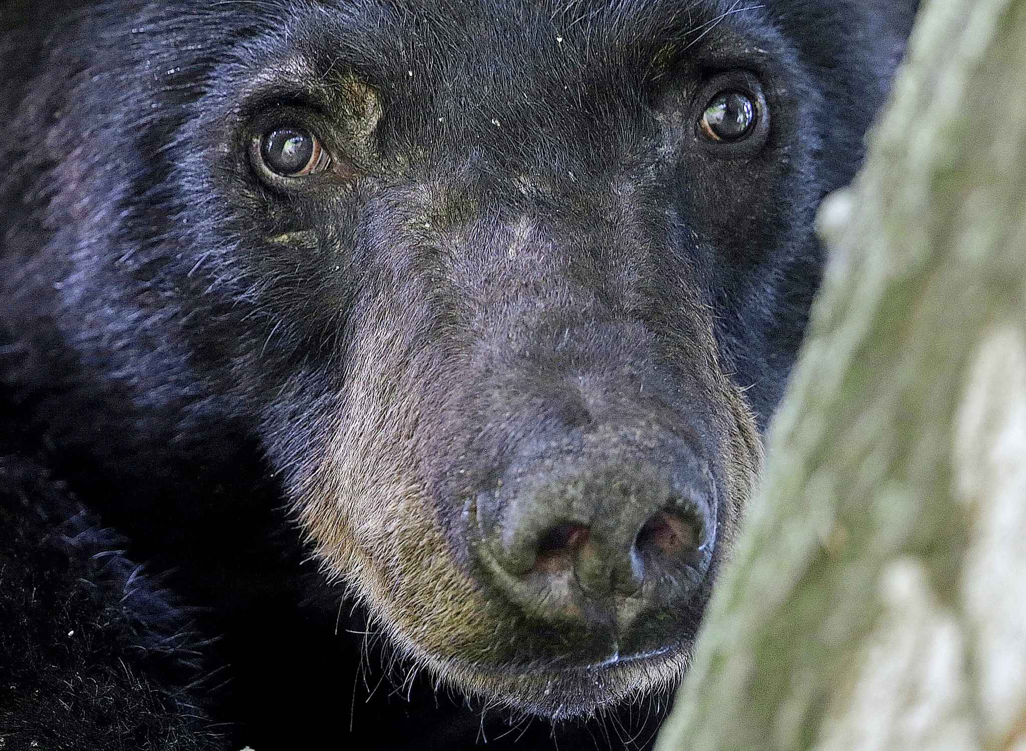 There have been two other reported incidents where bears have attacked people in Whiteshell Provincial Park this month. (Gerald Herbert / The Associated Press Files)