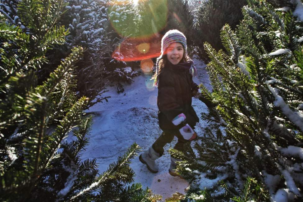 Maren Craig, 4, plays hide and seek amongst the Christmas trees while her parents tie one to the top of their car at The Rock Jewelry shop on Corydon Avenue.   Sunday, December 09, 2012.  (MIKE DEAL / WINNIPEG FREE PRESS)