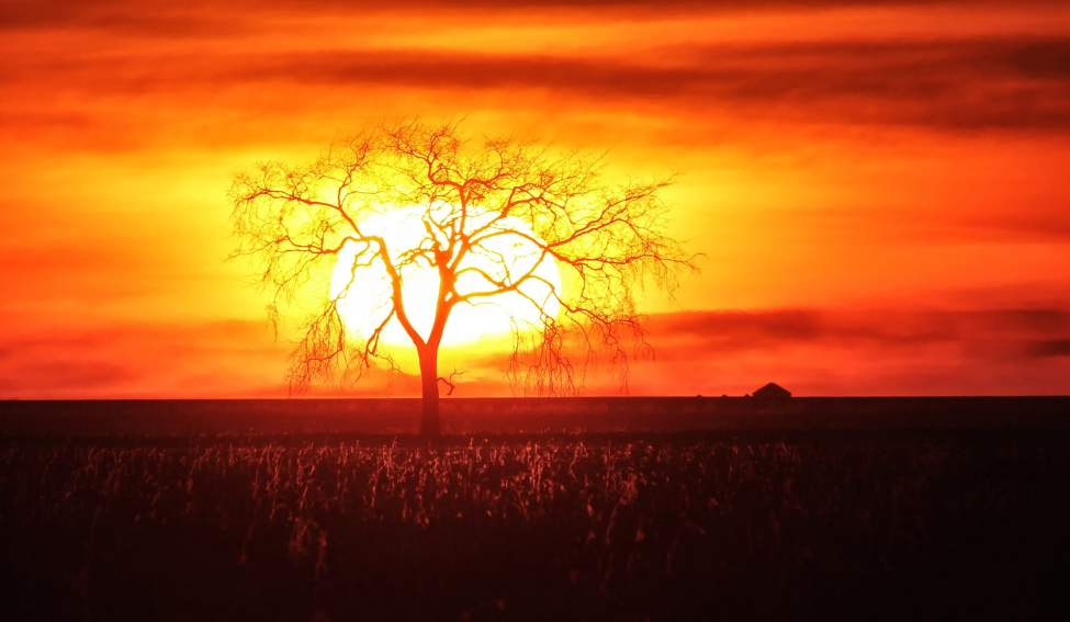 A prairie sun set - The sun sets casting a tree into silhouette south of the City of Winnipeg Sunday evening. November 24, 2013 (MIKE DEAL / WINNIPEG FREE PRESS)