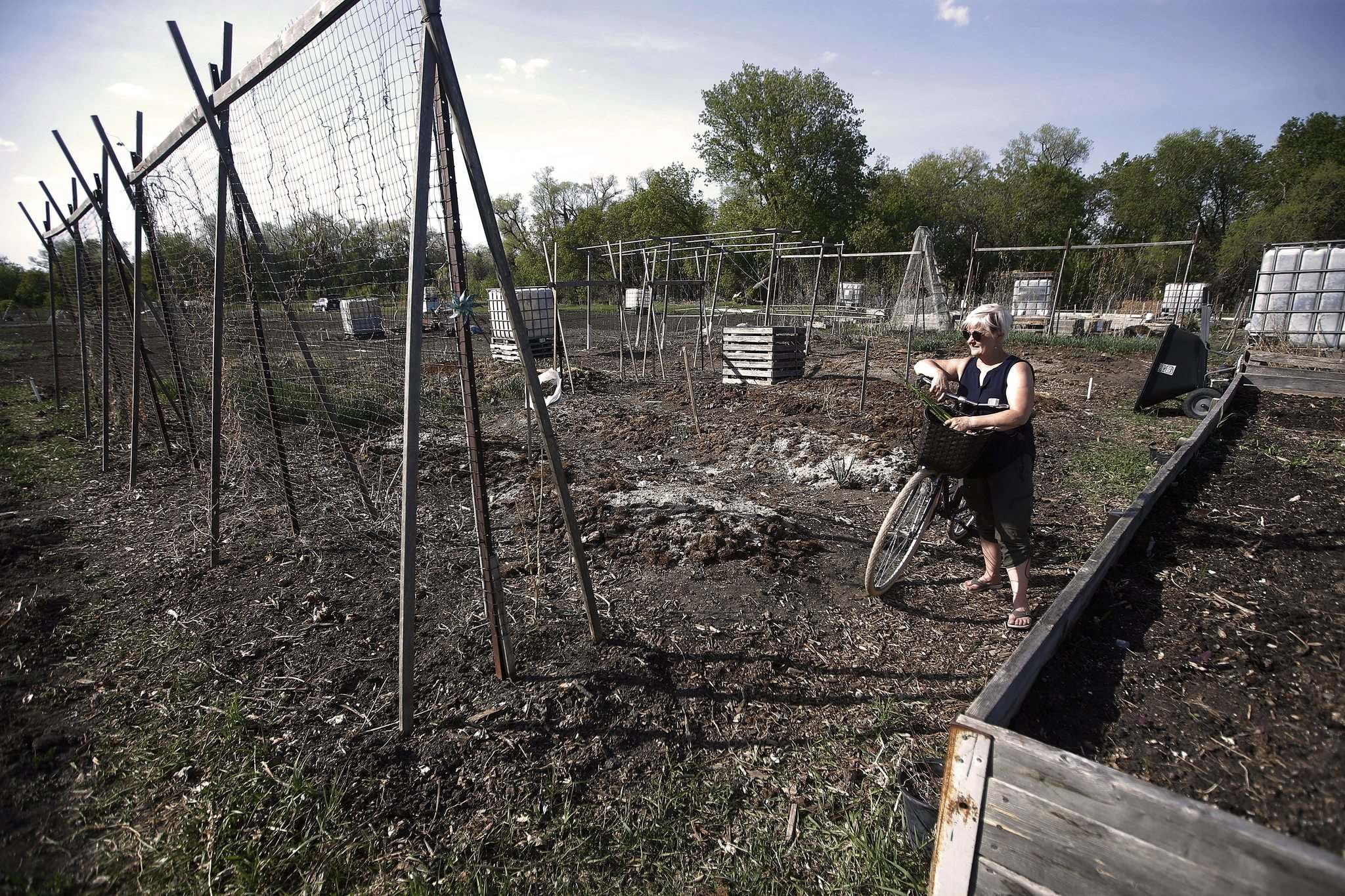 Ediger says meeting with fellow green thumbs and being outdoors keeps her coming back every spring to her Riverview Garden Society plot.</p>