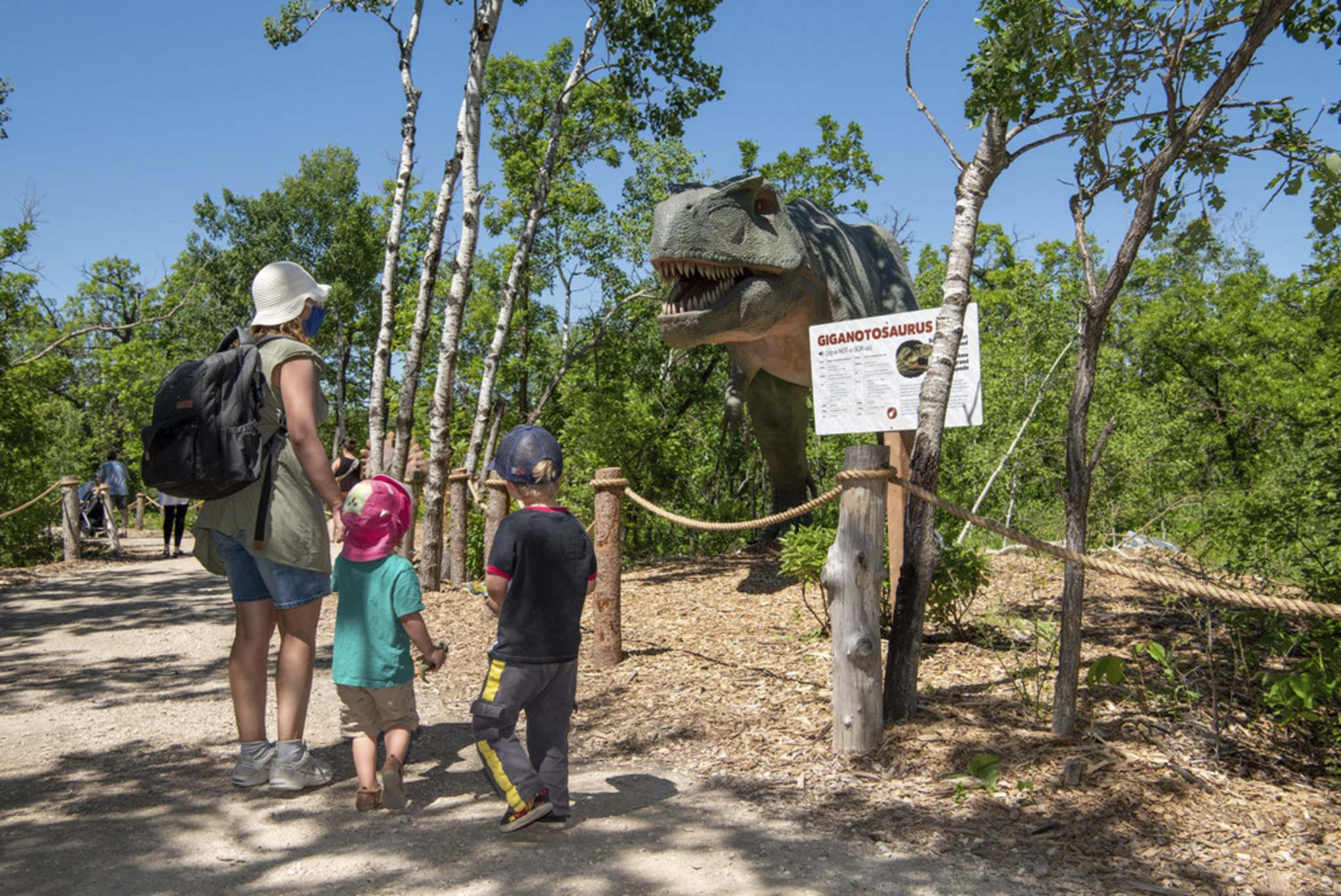 ALEX LUPUL / WINNIPEG FREE PRESS</p><p>Visitors to the Assiniboine Park Zoo take a sneak peek at a Giganotosaurus in the zoo's newest attraction, Dinosaurs Uncovered, in Winnipeg on Monday. The attraction features 17 life-size, animatronic dinosaurs along a forested trail in the northwest area of the Zoo. The zoo will be open to the public again starting Tuesday.</p>
