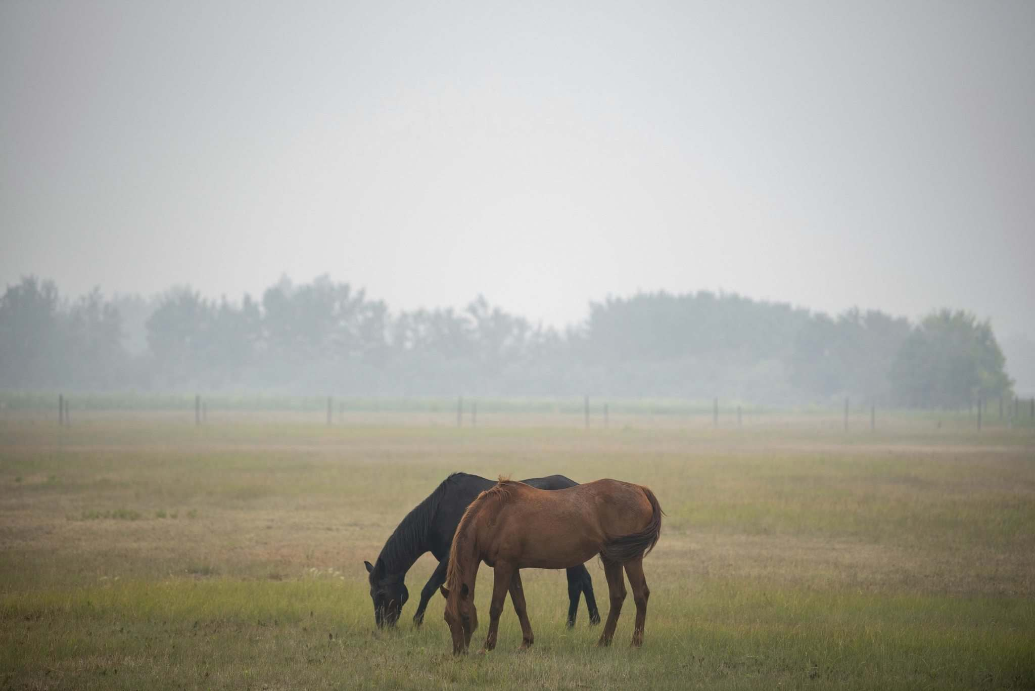 Alex Lupul / Winnipeg Free Press</p><p>Horses can be seen within the haze of smoke created by wildfires burning elsewhere in the province. </p>