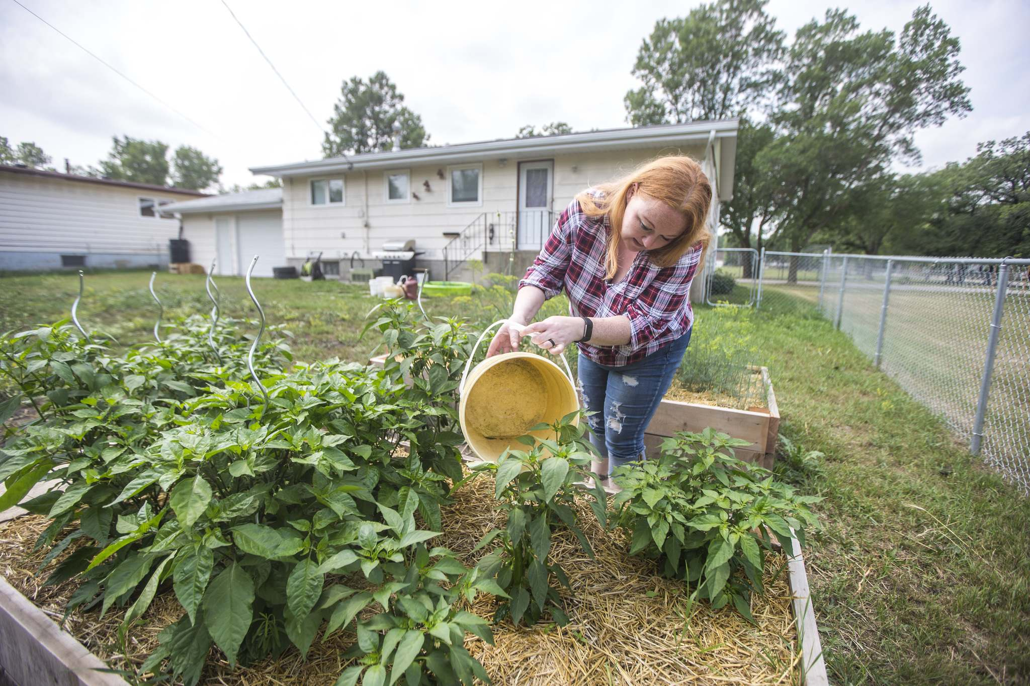 Morden resident Theresa Dueck uses buckets to water garden boxes in her yard.