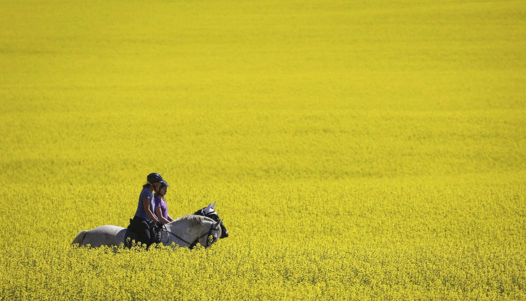 JEFF MCINTOSH / THE CANADIAN PRESS FILES</p><p>Canada has won some trade concessions from China over canola.</p>