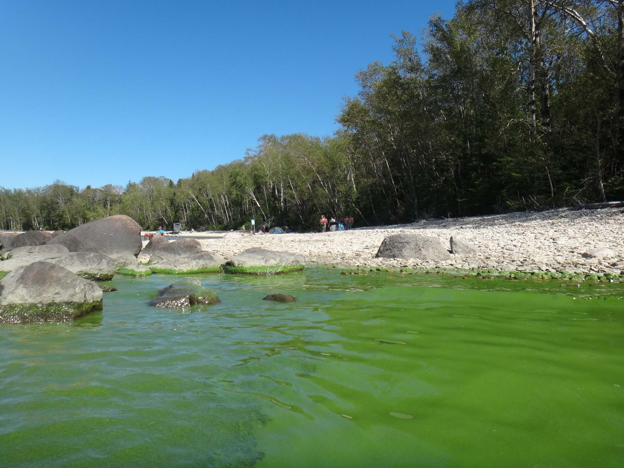 LAURIE BAILEY / WINNIPEG FREE PRESS FILES</p><p>Excess nutrients in our waterways can result in algae blooms such as this one on Lake Winnipeg, as seen at Hecla Island in August this year.</p>