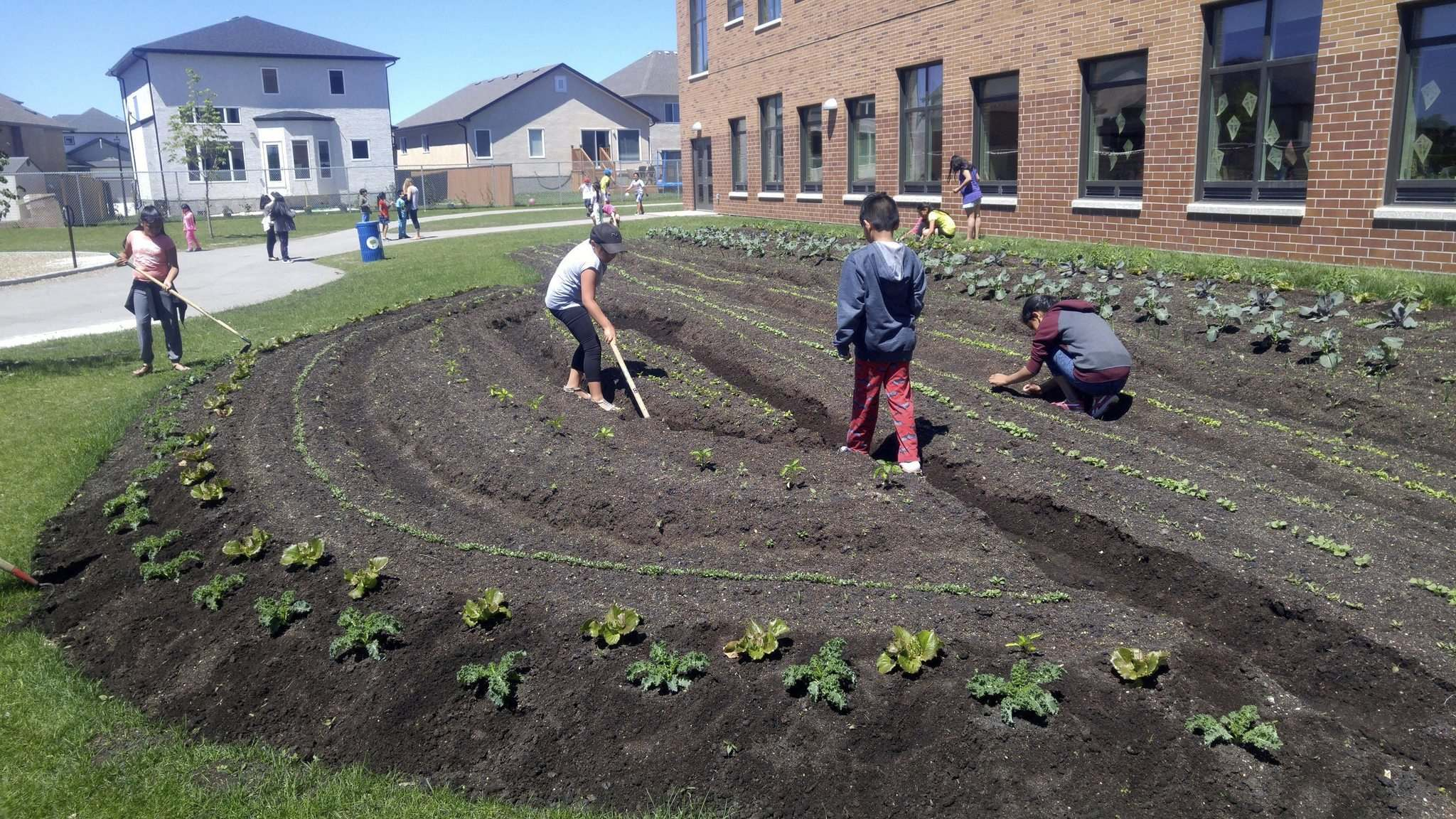 SUPPLIED</p><p>Amber Trails School students tend a garden growing vegetables.</p>