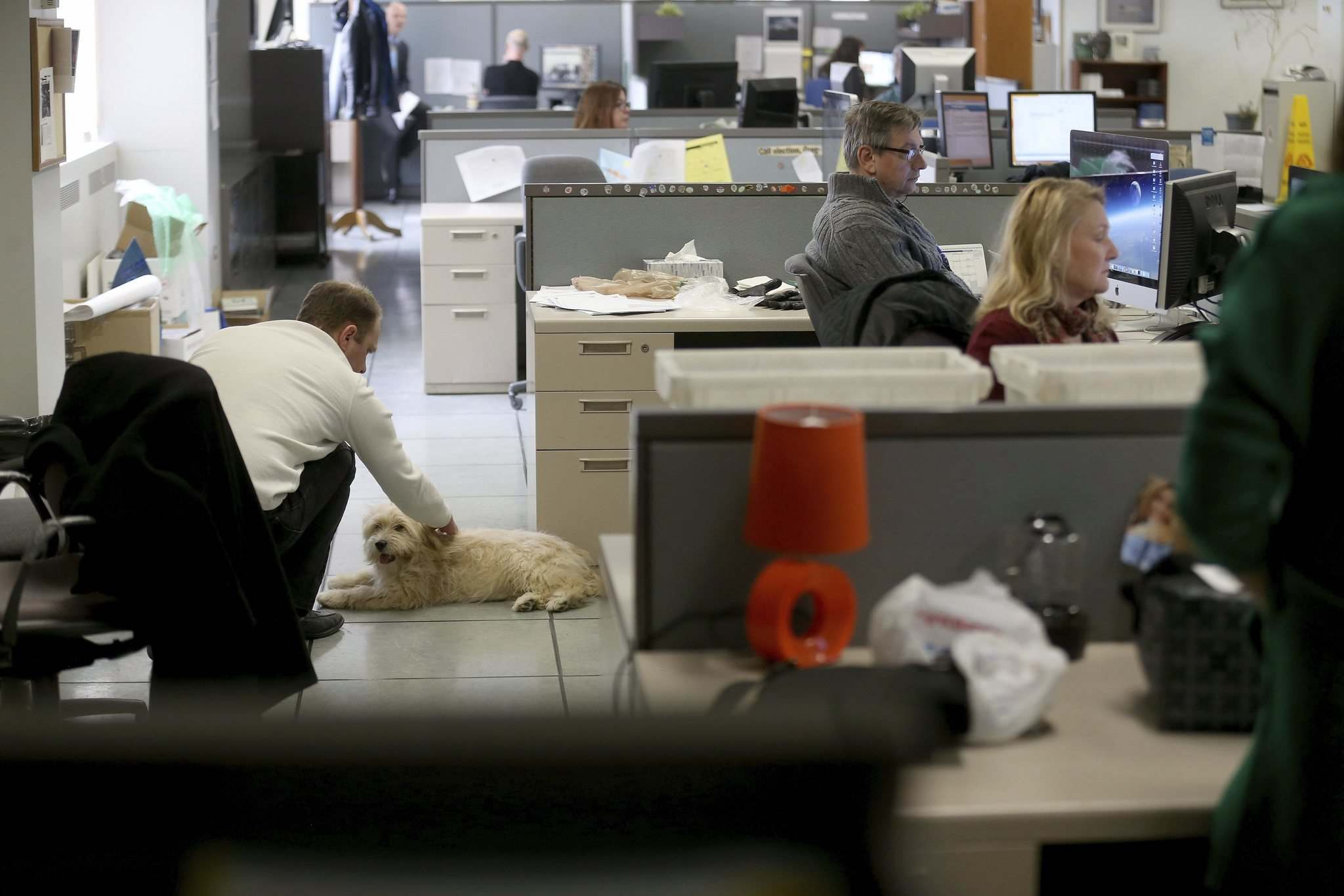 TREVOR HAGAN / WINNIPEG FREE PRESS</p><p>Oliver, a dog owned by graphic artist Leesa Dahl, at the Free Press office.</p></p>