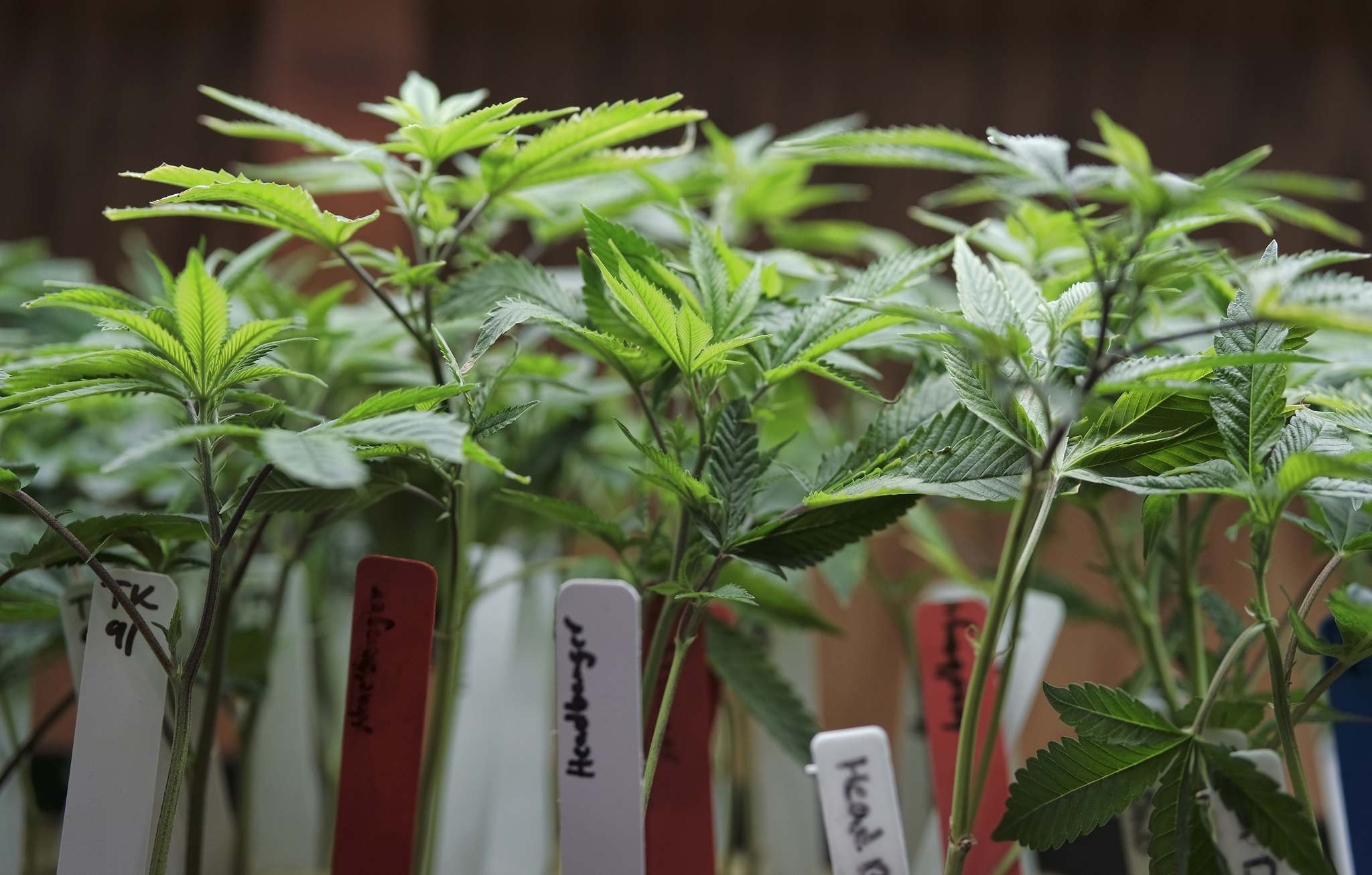 RICHARD VOGEL / THE ASSOCIATED PRESS FILES</p><p>The federal government has moved to legalize marijuana, but it is primarily the provincial governments that will deal with the consequences.</p>