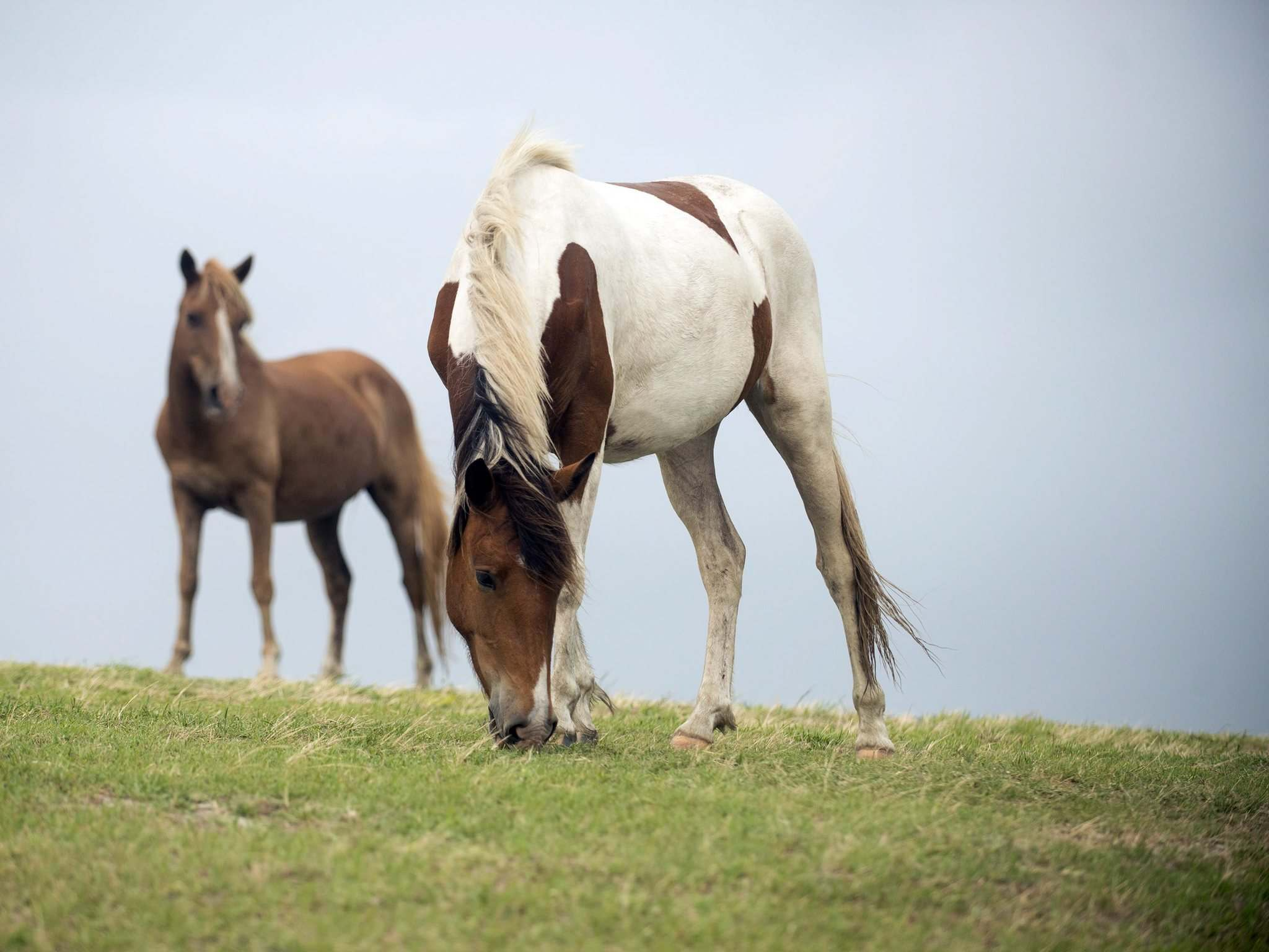 ASSOCIATED PRESS FILES</p><p>The majority of horses carrying the virus are undiagnosed.</p></p>