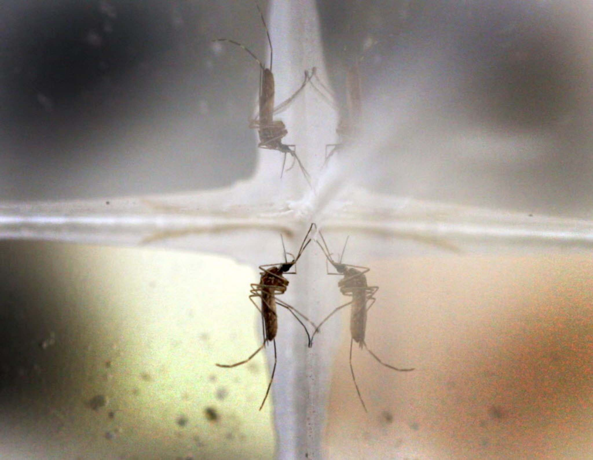 Mosquito infected with West Nile Virus discovered in Garden Grove