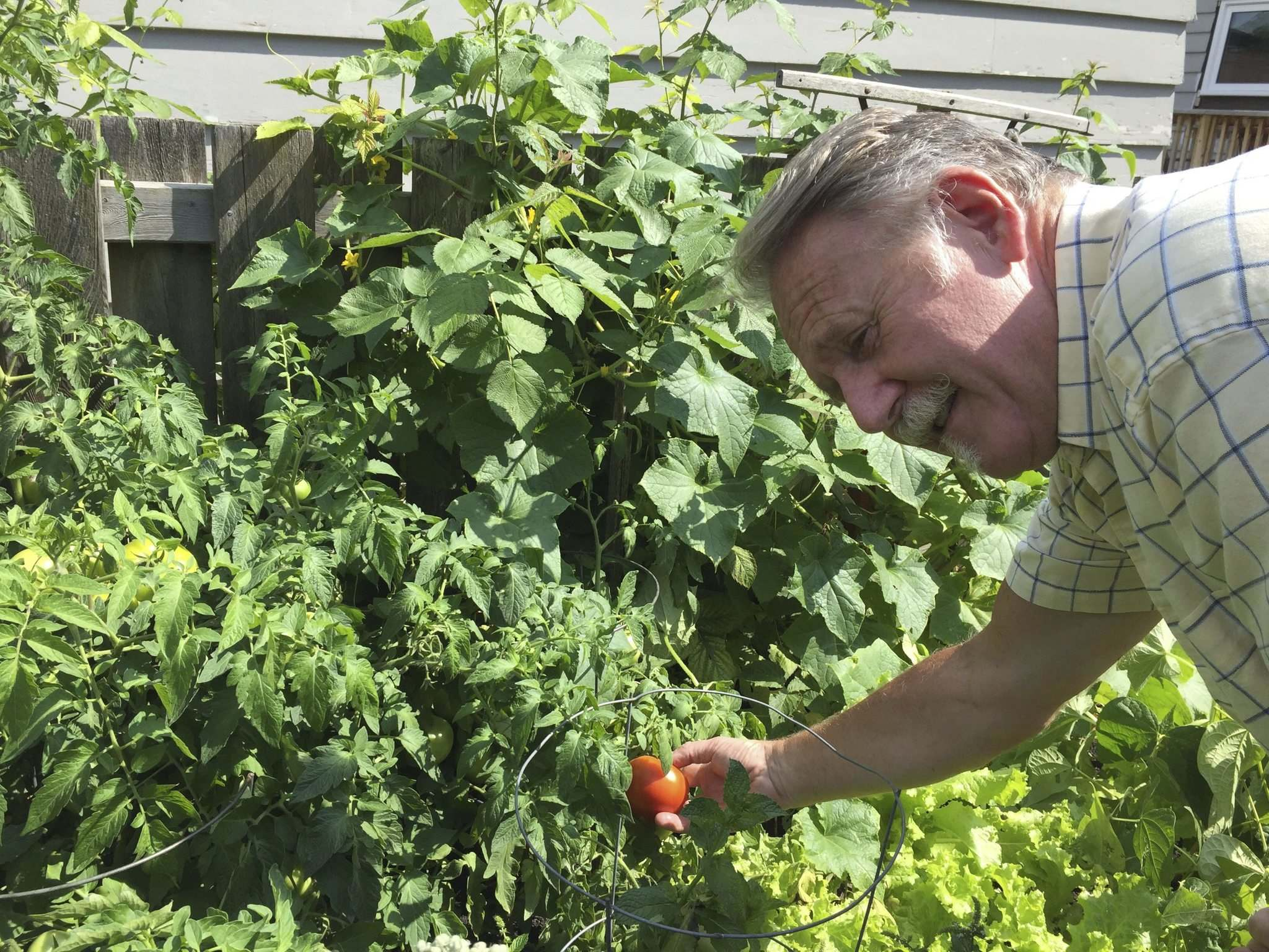 BEN WALDMAN / WINNIPEG FREE PRESS</p><p>Gary Tessier and his wife have kept a St. Boniface-area backyard garden for 35 years, and are now concerned about eating their own produce.</p>