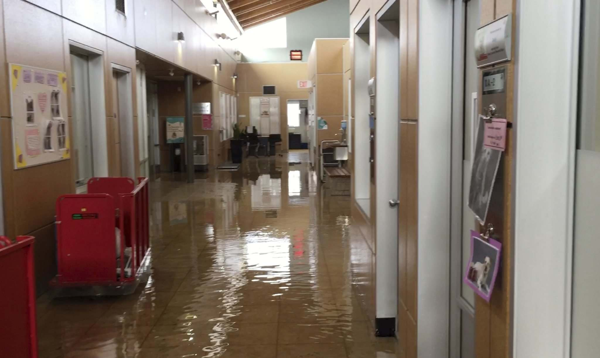 SUPPLIED Photo from video of the Winnipeg Humane Society flood triggered by a burst water pipe Monday.</p>