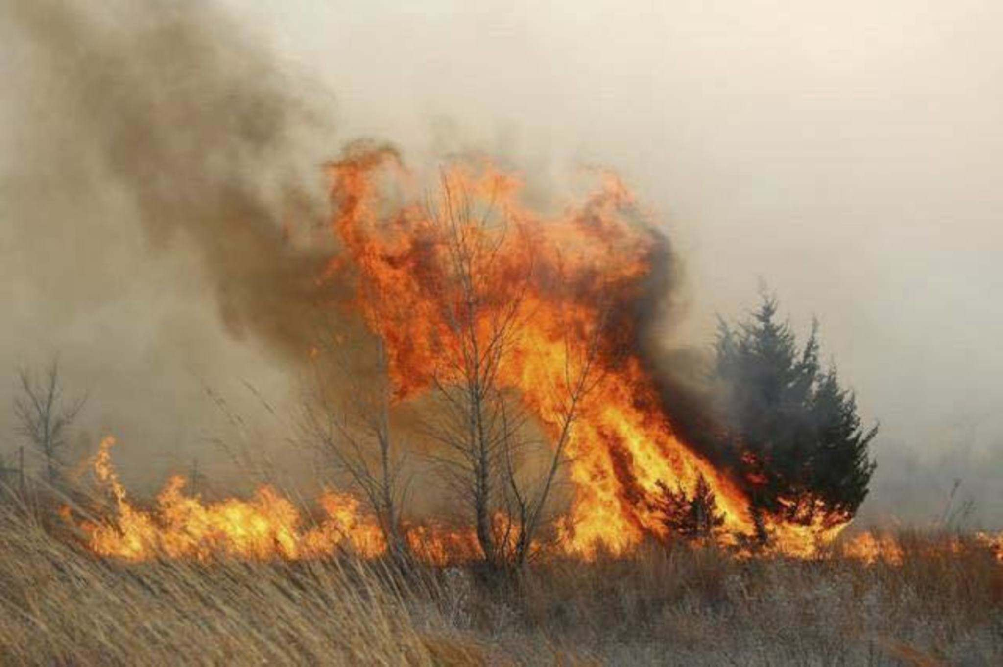 UNITED FIRE FIGHTERS OF WINNIPEG</p><p>Crews were called to a huge grass fire, which was whipped by gusting winds, Sunday morning. A section of the Trans-Canada Highway along Fermor Avenue was closed because of smoke.</p>