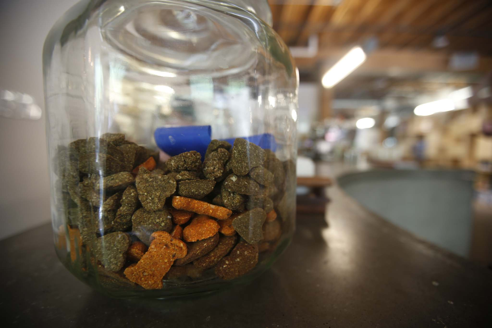 Dog treats and bowls of water are provided for four-legged furry friends at Forth in the Exchange. (John Woods / Winnipeg Free Press)