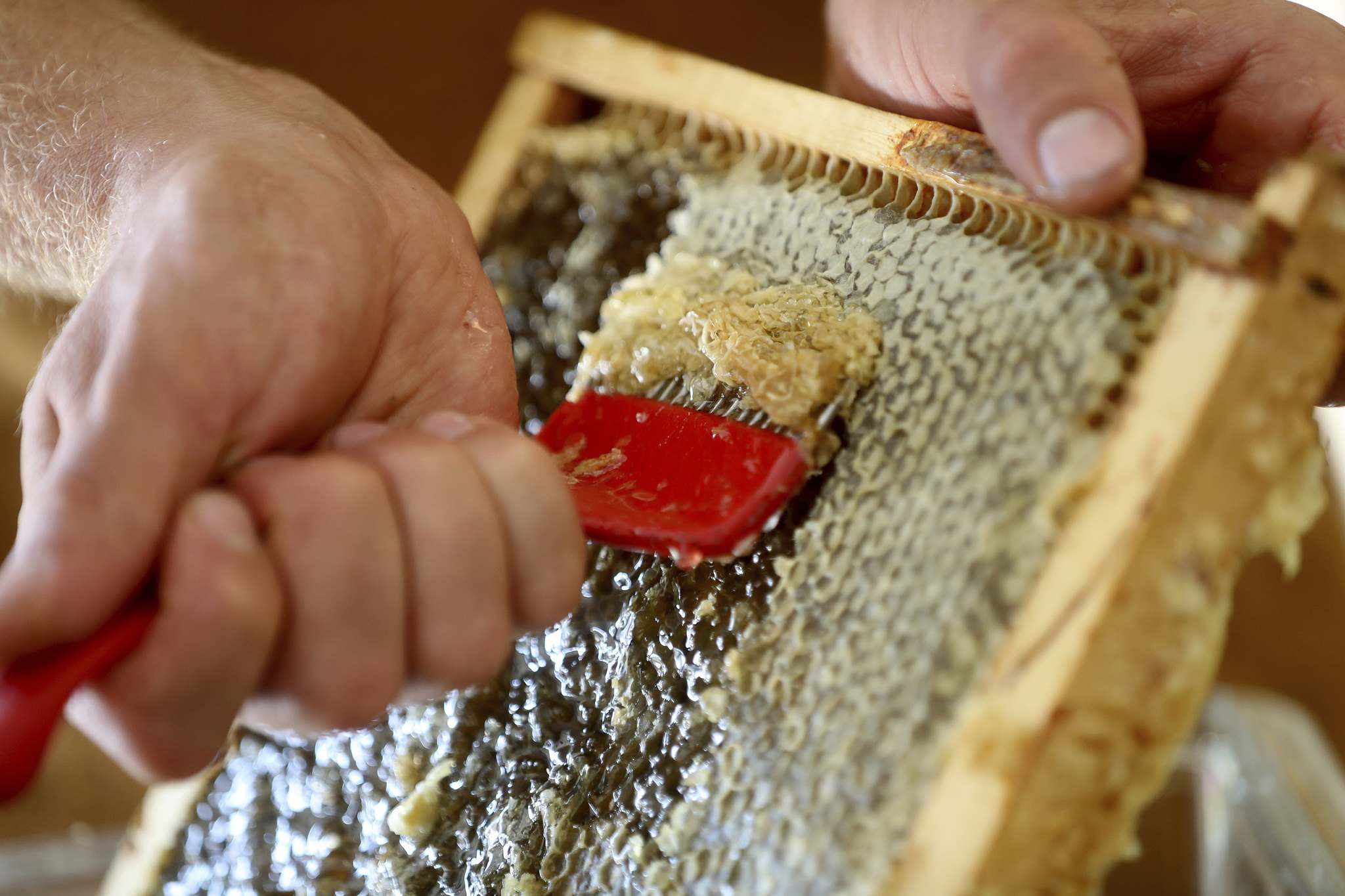 "The apiculturists scrape through the honeycomb's hexagonal cells with a special ""scratcher"" to let the honey flow freely."