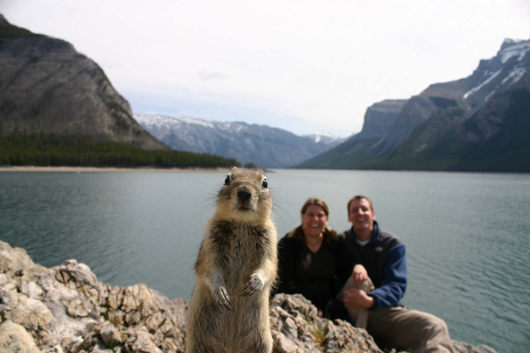 Melissa Brandts</p><p>An Alberta ground squirrel inserts itself into a timed photo being taken by a U.S. couple at a lake in Banff National Park in 2009.</p></p>