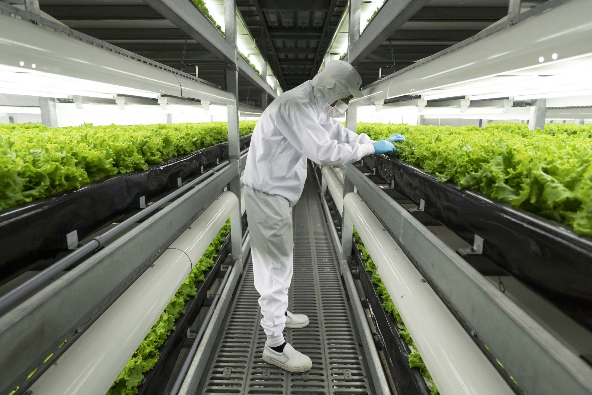 Tomohiro Ohsumi / Bloomberg</p><p>Spread Co.&rsquo;s facility in Kameoka, Japan, produces about 300 heads of lettuce per square metre annually. The company&rsquo;s new factory is expected to double that output.</p></p>