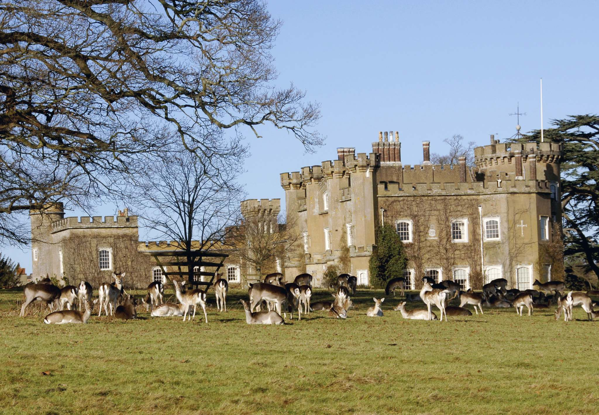 Charlie Burrell</p><p>A herd of fallow deer, a type that has been living on the land for 1,000 years, congregates at Knepp Castle.</p></p>