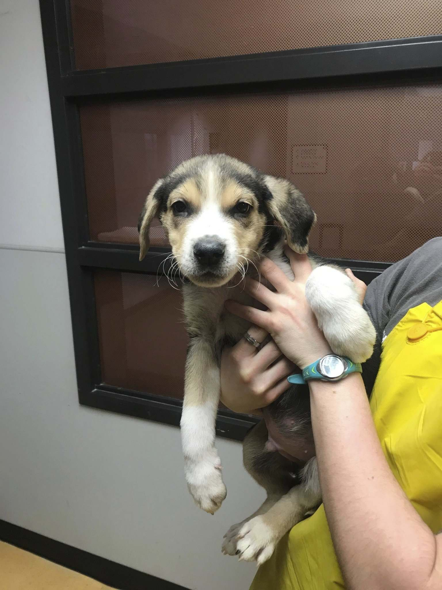 Police found 10 puppies and five adult dogs inside the West End house. (Winnipeg Police Service photo)</p>