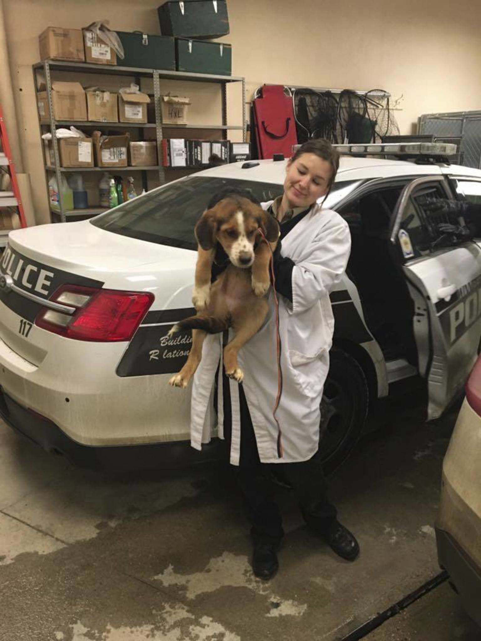 Cruiser cars that transported the dogs had to be decontaminated, a police spokesman said. (Winnipeg Police Service photo)</p>