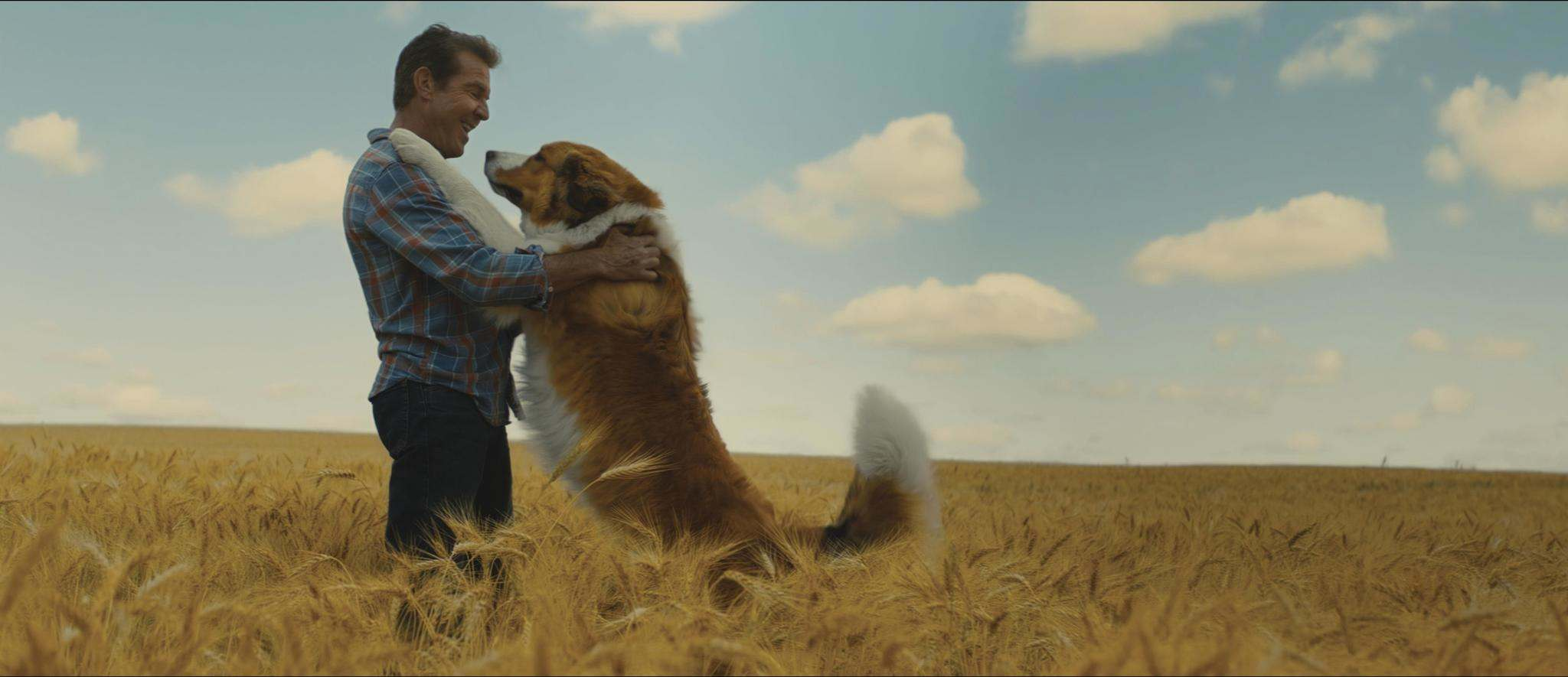 Universal Pictures</p><p>A farm field in Manitoba sets the stage for Ethan (Dennis Quaid) and Bailey as Buddy, a Great Pyrenees Bernese Mountain Dog (voiced by Josh Gad).</p></p>