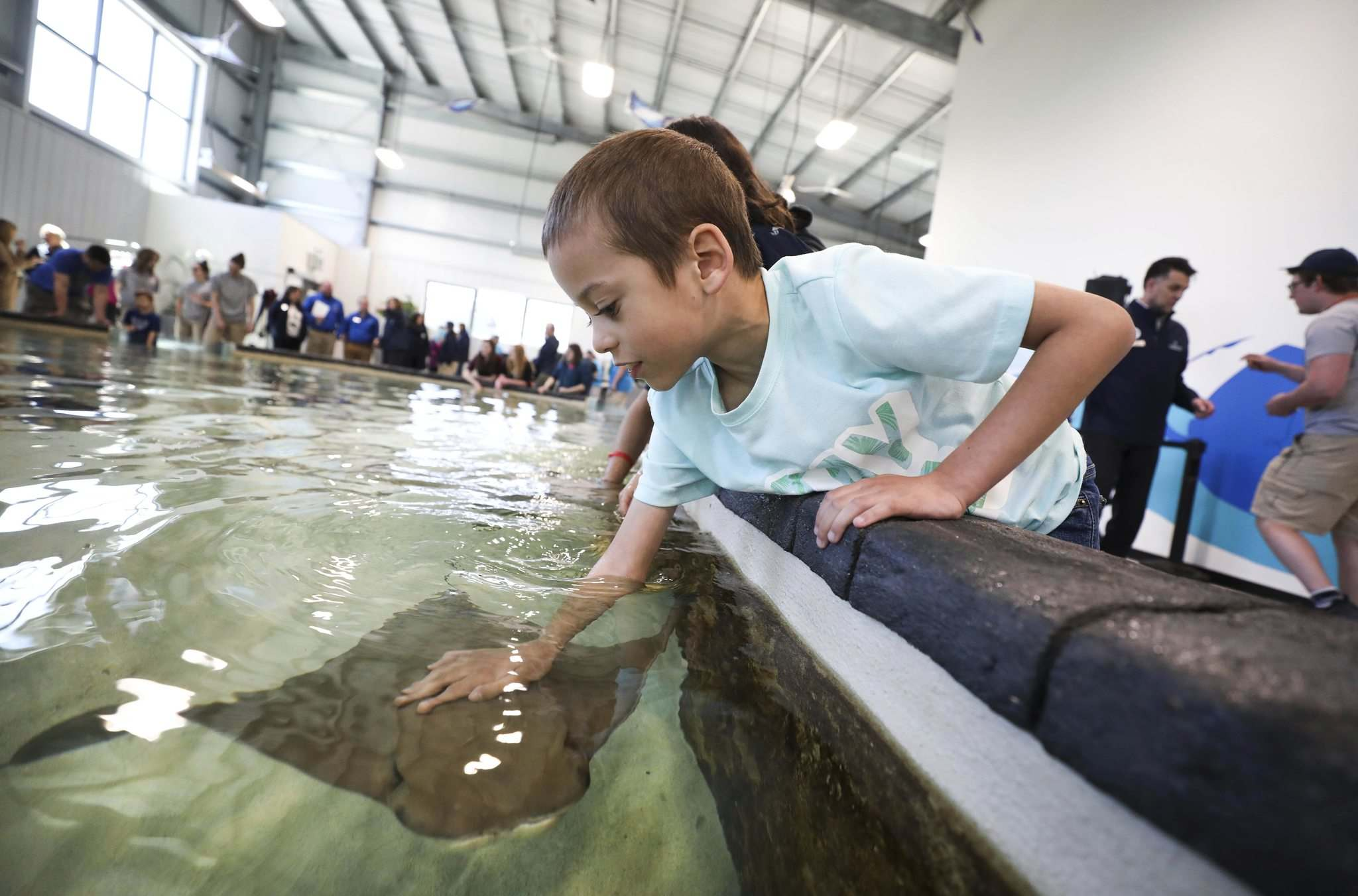 <p>8-year-old Xavi Monge pets a stingray in the aquatic tank at the new exhibit Thursday.</p>