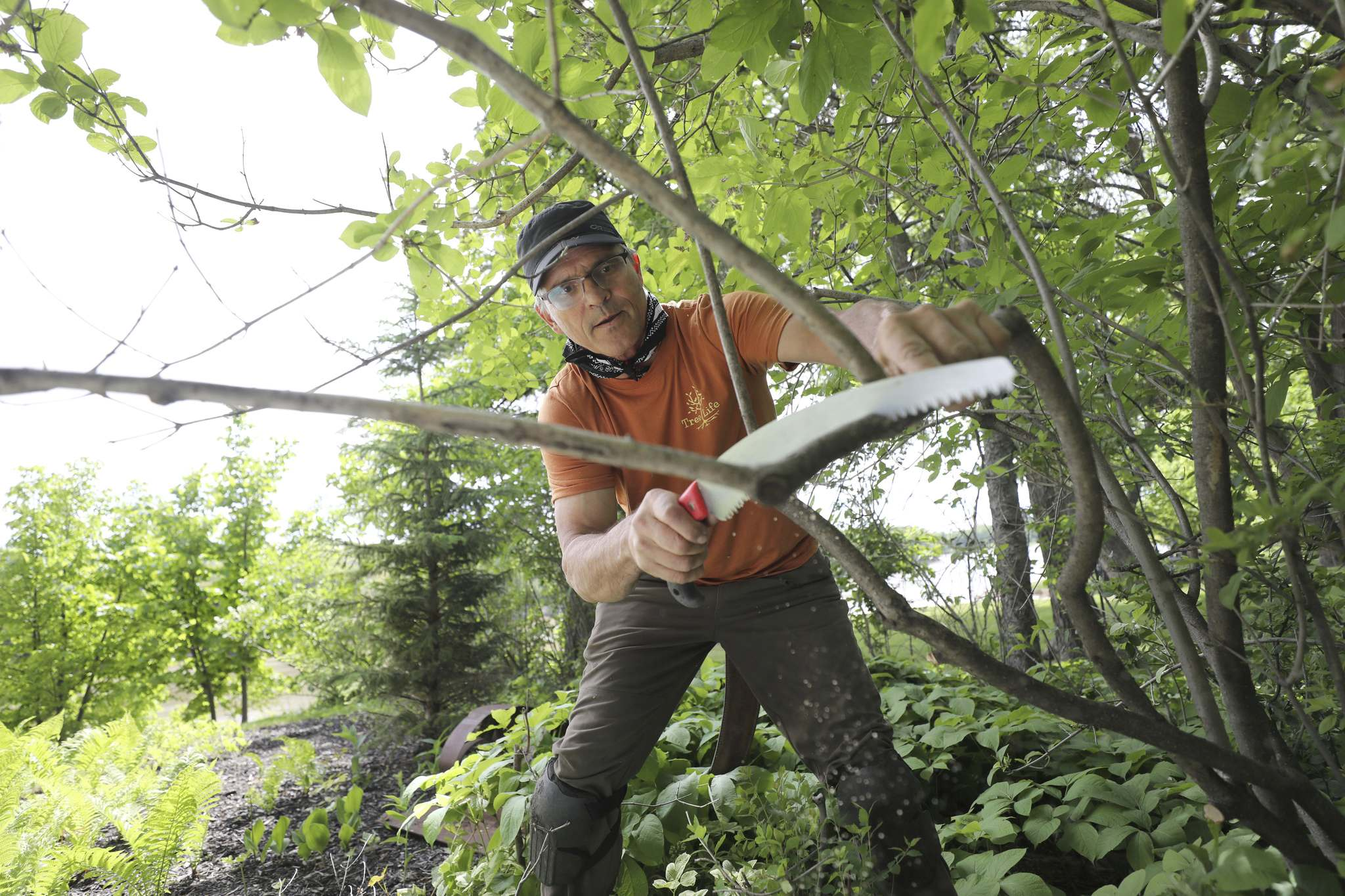 RUTH BONNEVILLE / WINNIPEG FREE PRESS</p><p>Gerry Engel, president of Trees Winnipeg, says rapid removal of diseased elms is key to preserving the healthy ones.</p>