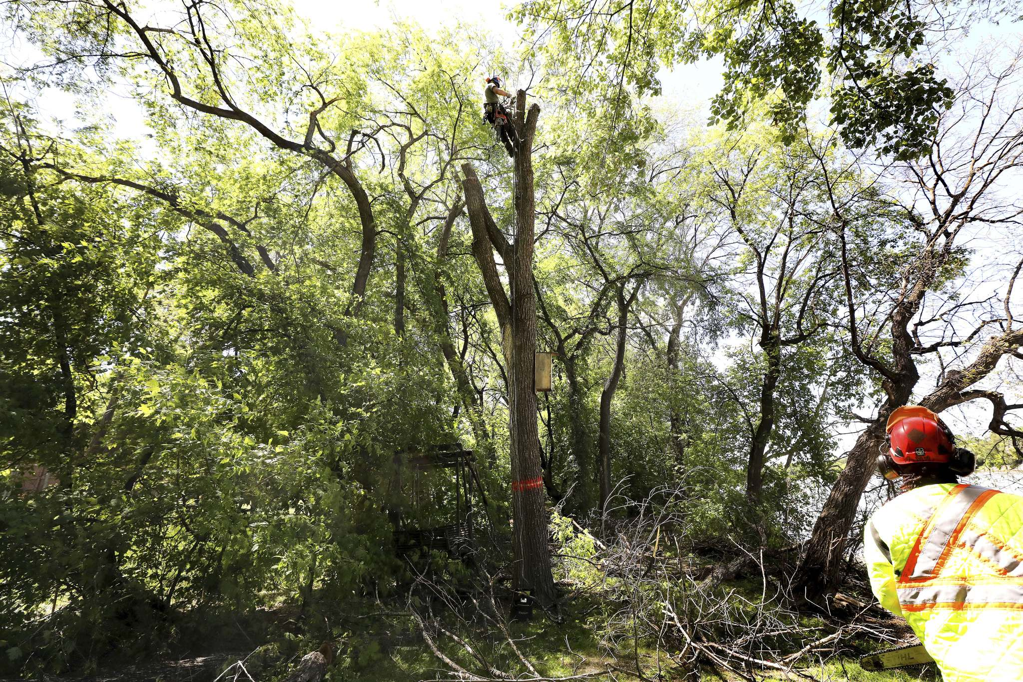 RUTH BONNEVILLE / WINNIPEG FREE PRESS</p><p>City of Winnipeg arborist Rick Vogel brings down a diseased elm, located along the Red River near Henderson Highway, one section at a time.</p>