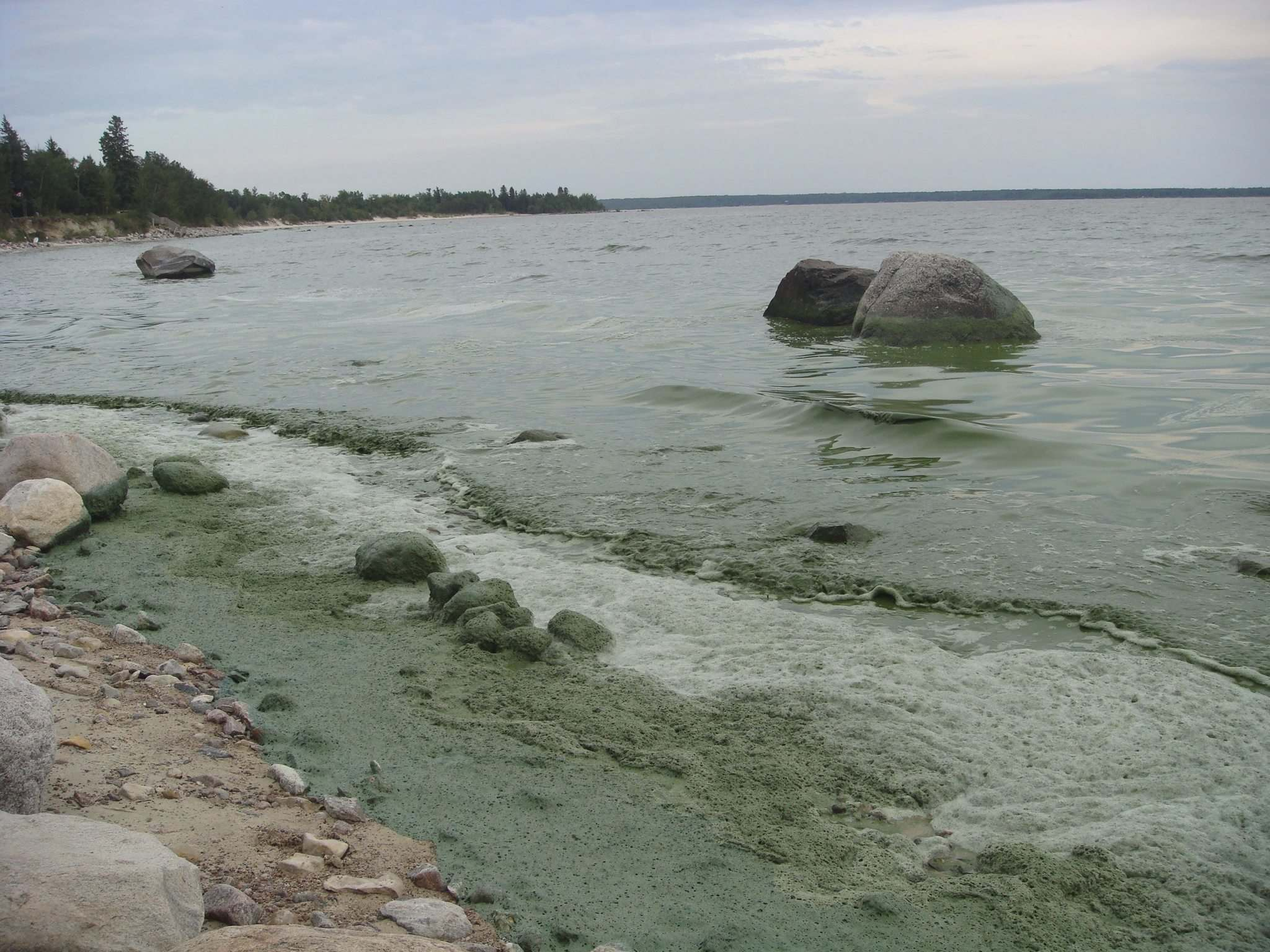 Laurie Bailey / Winnipeg Free Press files</p><p>Victoria Beach algae is seen over the August long weekend in 2010. Nine years later, it's become impossible to ignore our growing algae problem. Other places have taken steps to protect the water, and we should be doing the same.</p></p>
