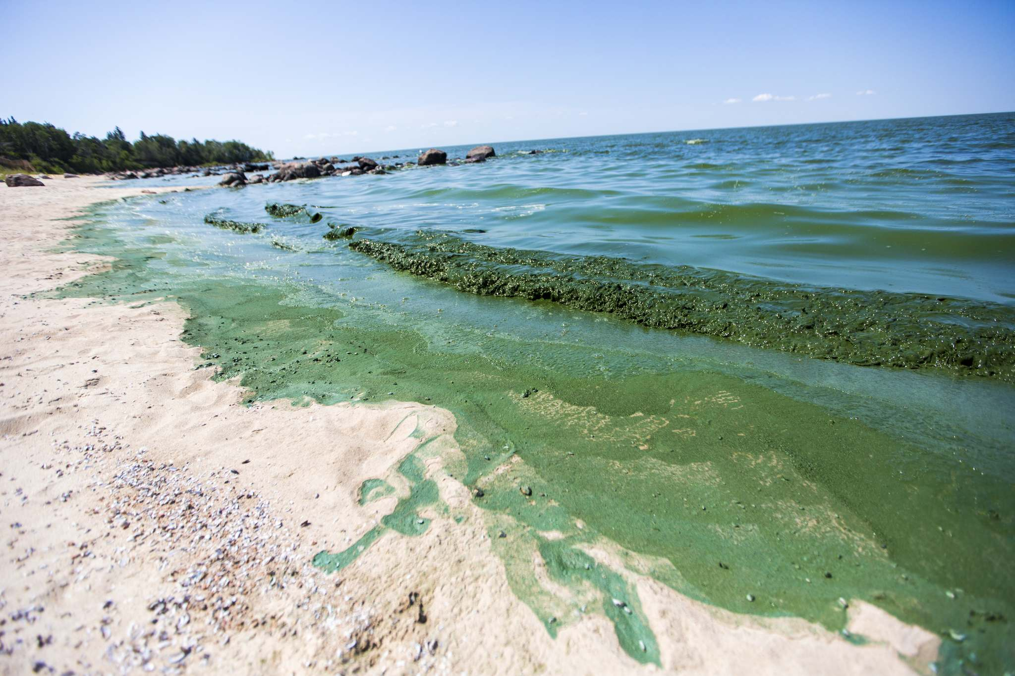 The presence of phosphorus in the Red River has been identified as the culprit for the appearance of green algae in Lake Winnipeg, with the North End sewage treatment plance considered to be the largest, single-point contributor of phosphorus to the lake. (Mikaela MacKenzie / Winnipeg Free Press files)</p>