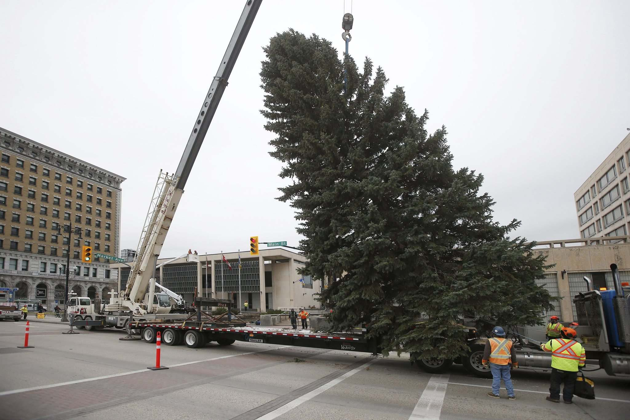 For 55 years, Winnipeggers have been donating a large Christmas tree to the city, which is decorated and put up outside of city hall each holiday season. (John Woods / Winnipeg Free Press files)