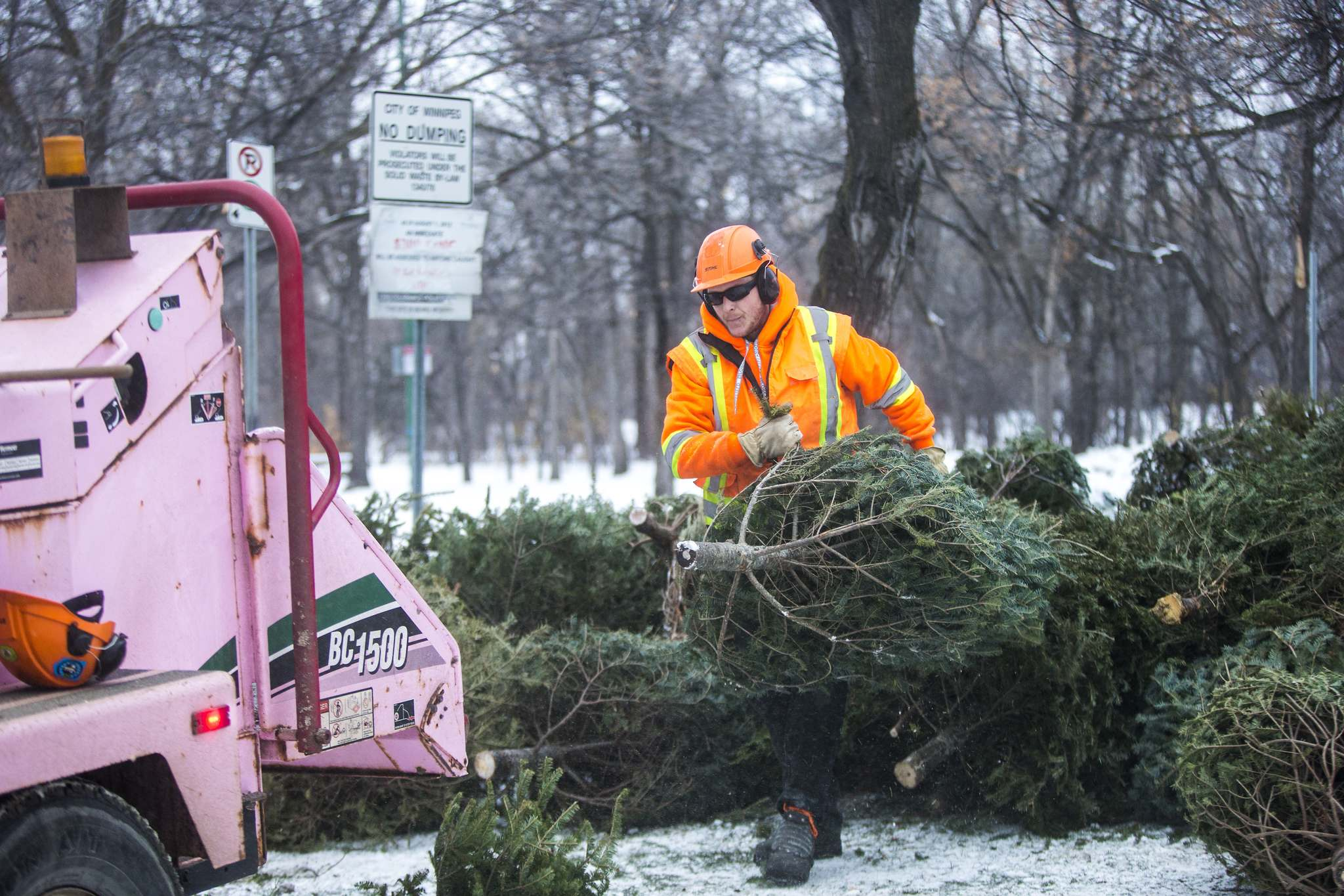 Toby Herselman, groundscrew for Shurwood Forest, feeds trees into the chipper at Kildonan Park.
