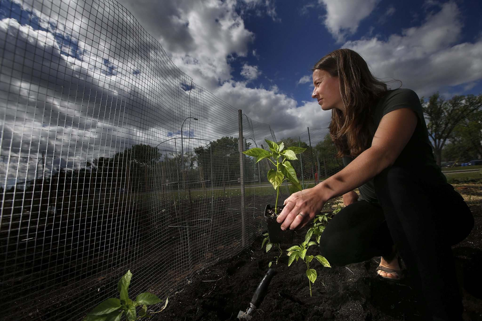 JOHN WOODS / WINNIPEG FREE PRESS</p><p>Jeanette Sivilay, co-ordinator for the Winnipeg Food Council, does some planting in her garden plot at the Grant Avenue Community Garden. She says community gardens are seeing growth as COVID-19 highlights the issue of food security.</p></p>