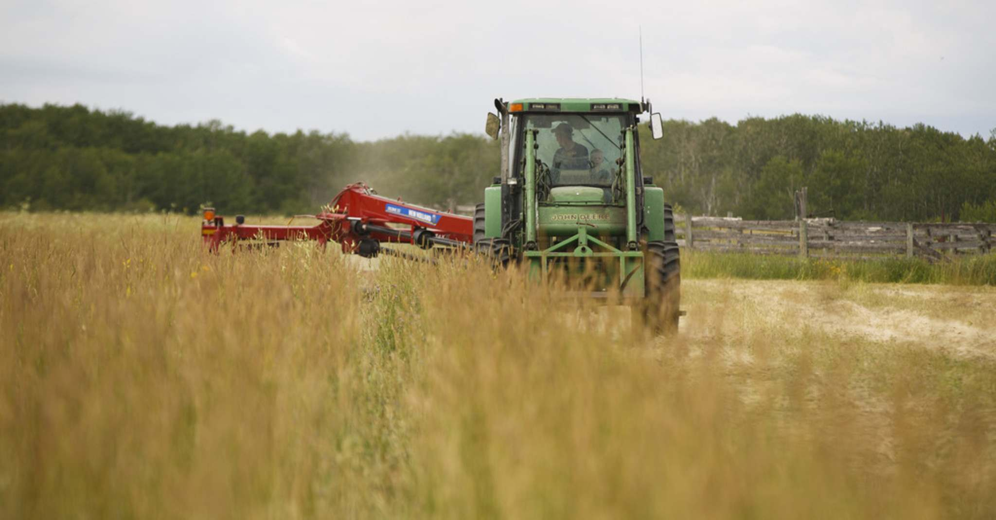 Graham Tapley, joined in the tractor cab with his son Walker, 2, cuts hay for the cattle.</p>