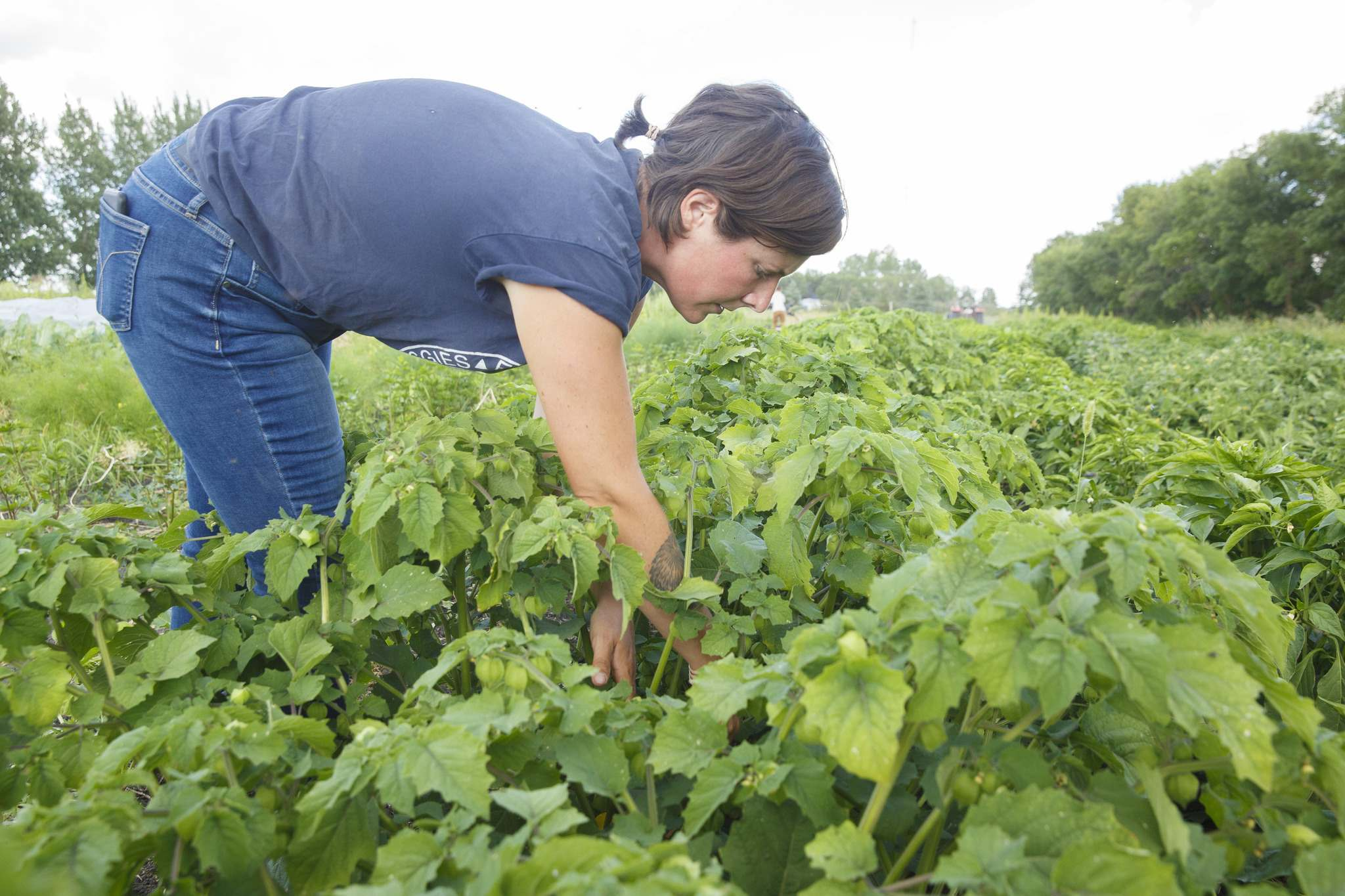Britt tends to the vegetable patch.</p>