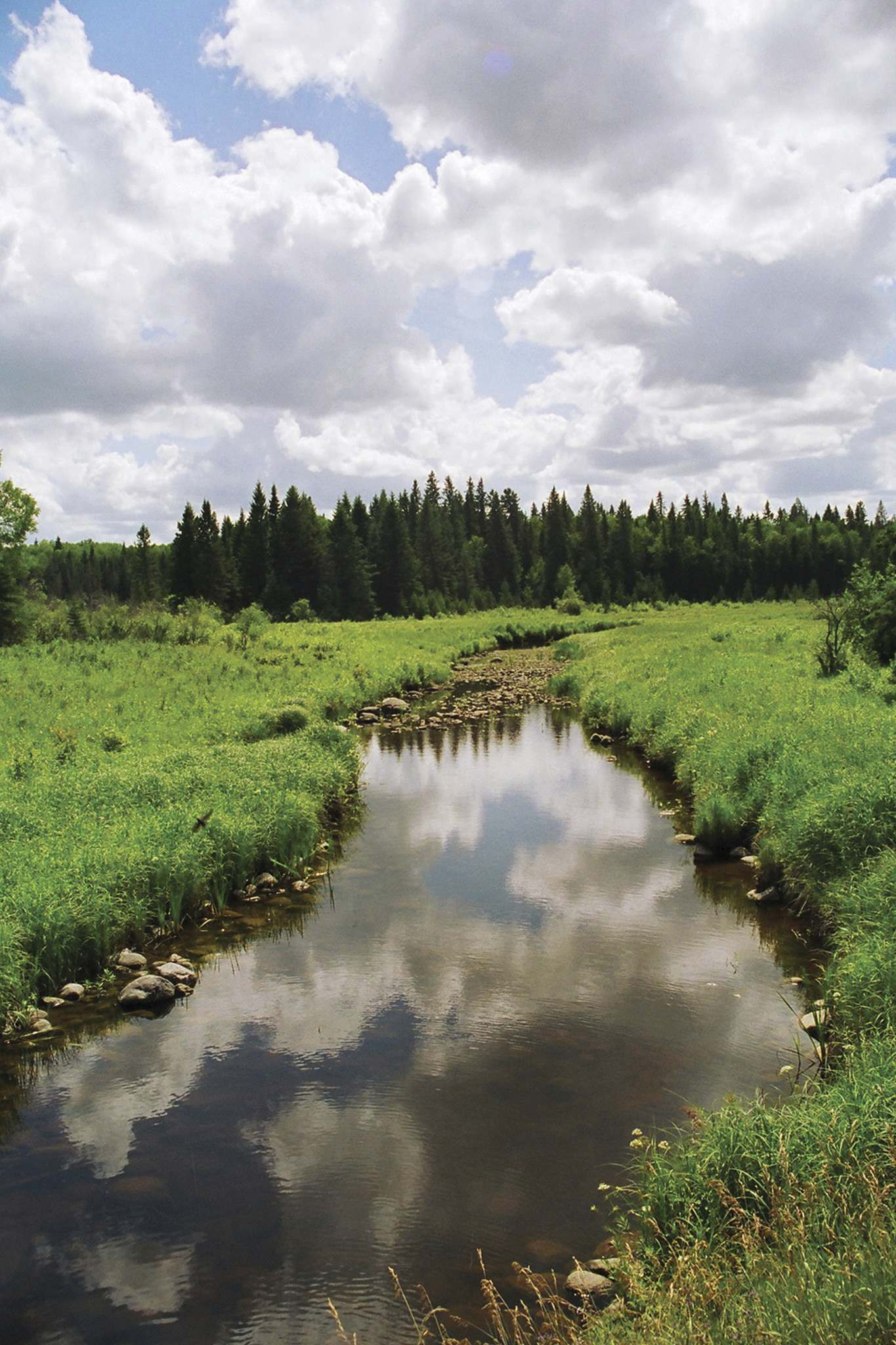 Supplied</p><p>Riding Mountain's expanses of forest, meadows, lakes and streams make it one of the best places in Canada to view wildlife.</p></p>
