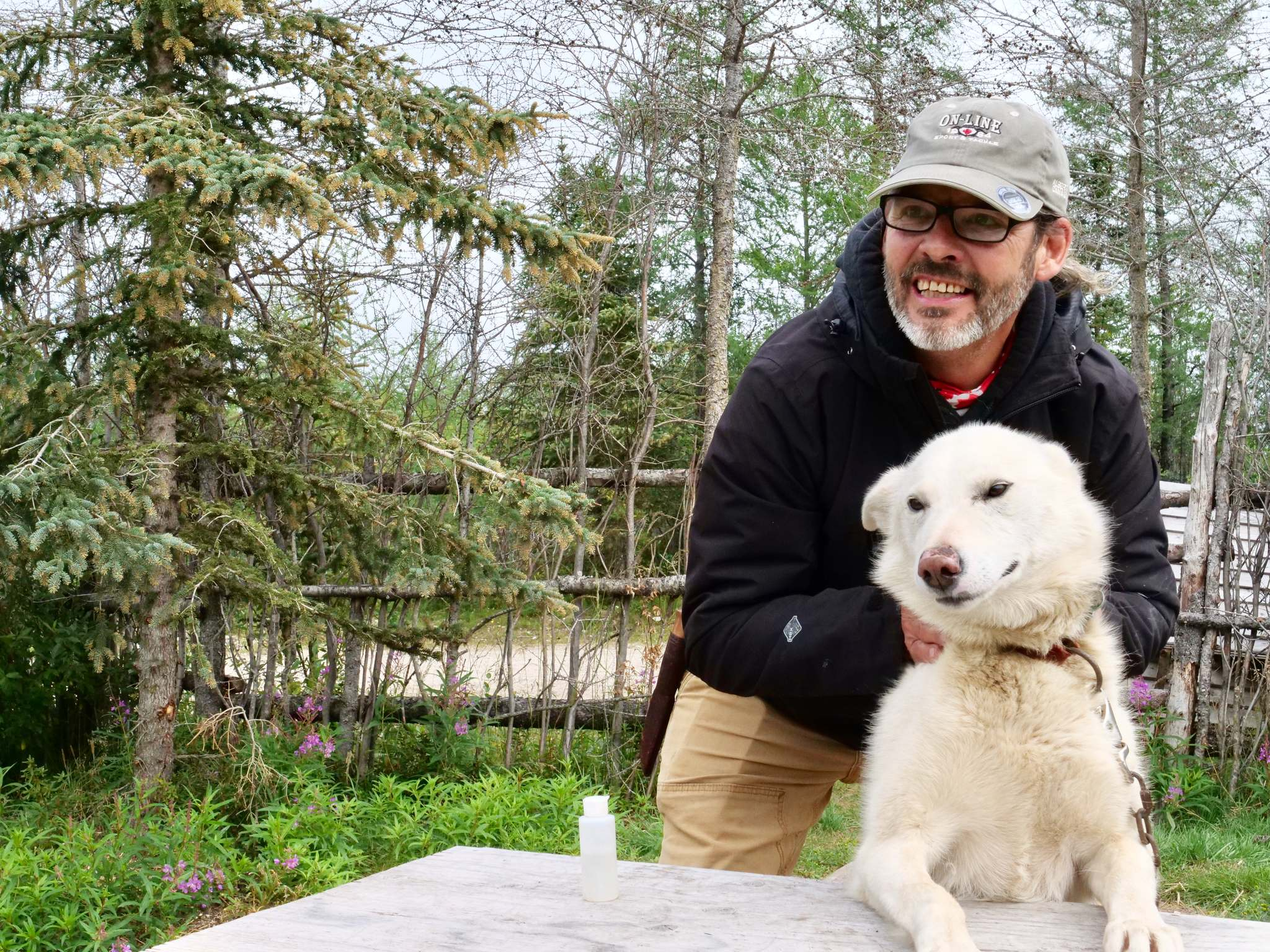 Dave Daley rubs one of his sled dogs down with insect repellant before taking the dogs for a run.