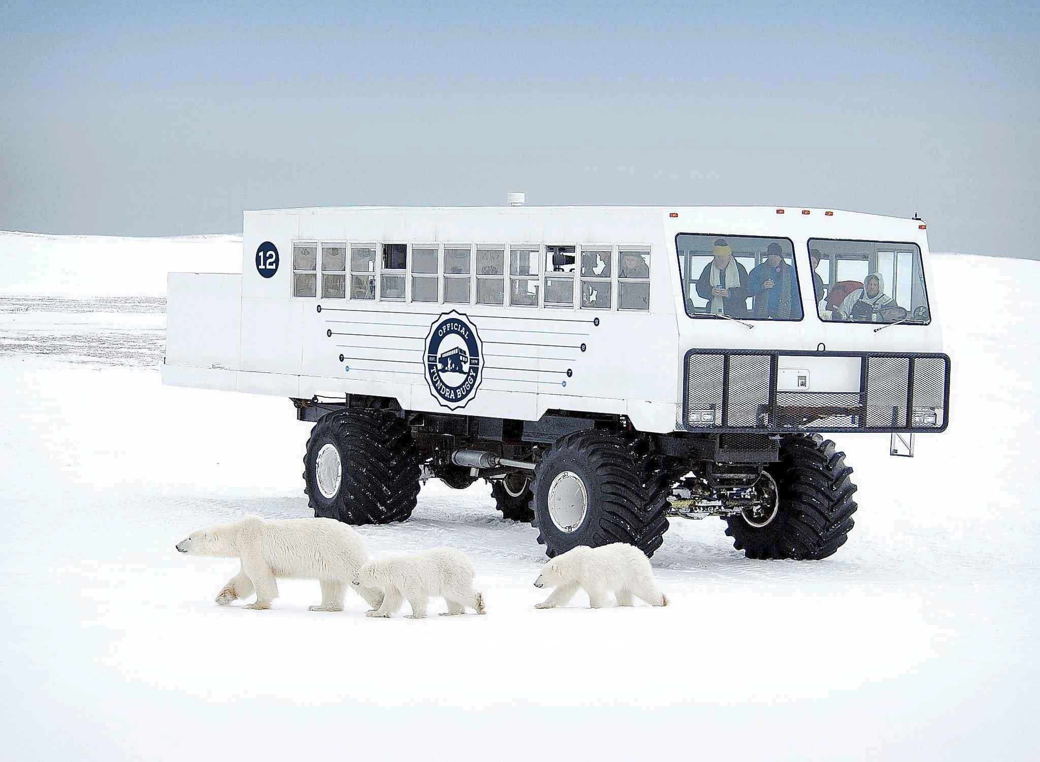 This Tundra Buggy, owned by Frontiers North Adventures, will be converted to electric power from diesel. Manitoba taxpayers will chip in $149,000. (Robert Taylor / Frontiers North Adventures)</p>