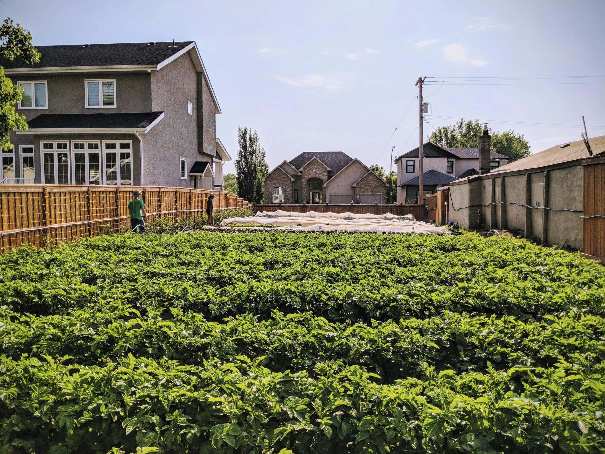 SUPPLIED</p><p>Colin Remillard of St. Leon's Garden Centre says community gardens can be a great way to utilize empty lots, beautify a neighbourhood and encourage local food growth and consumptions. His dad runs one that produces veggies that St. Leon sells.</p>