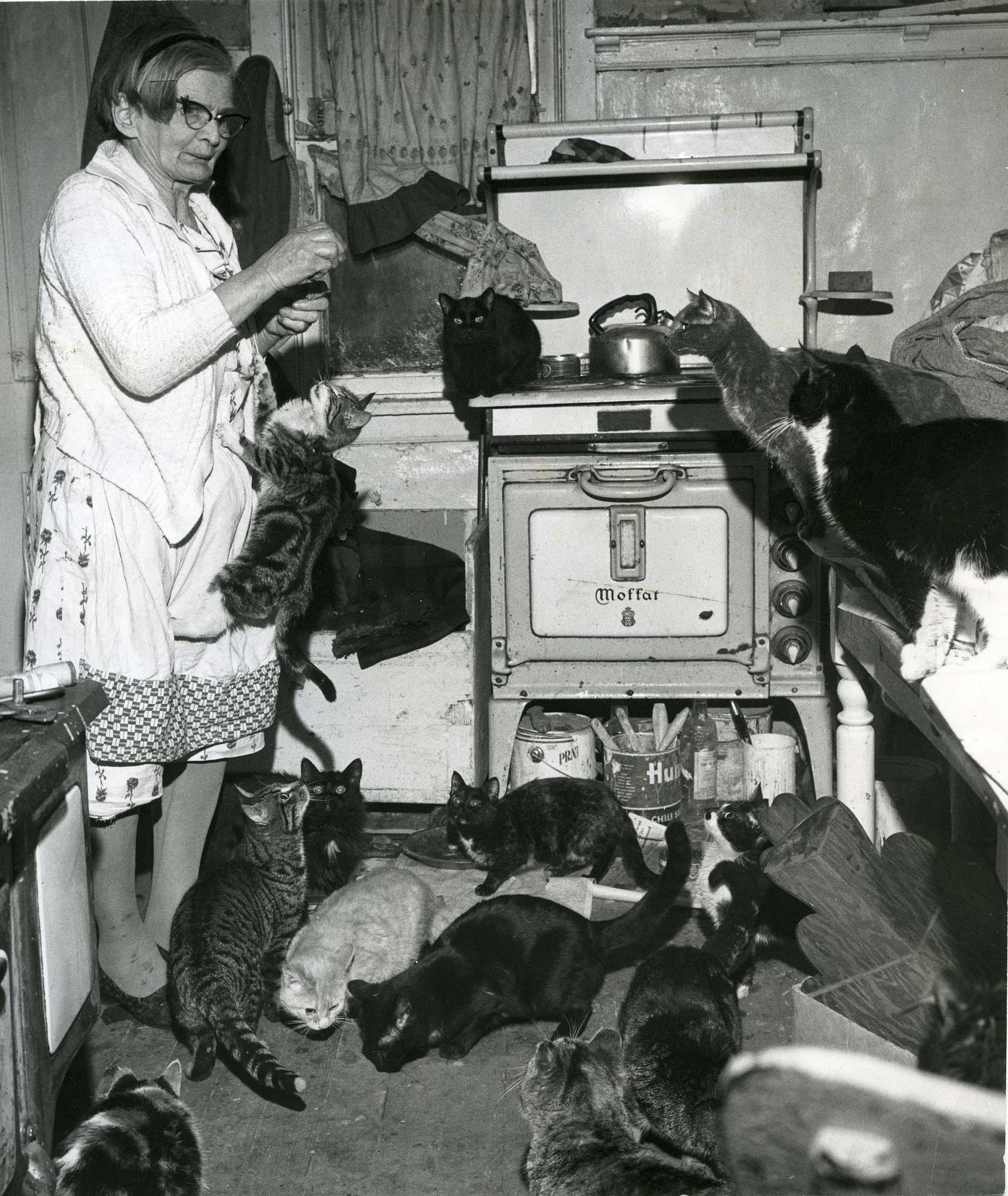 """The city had sought to restrict the Bertha Rand's number of cats with a so-called """"anti-cat bylaw."""" (Winnipeg Free Press files)</p>"""