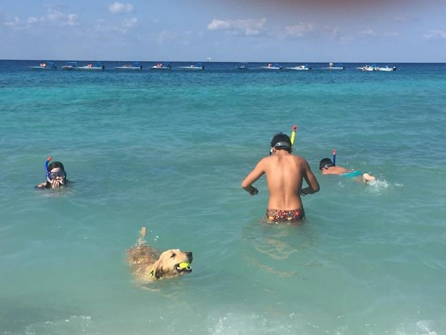 This Dec. 25, 2017 photo taken in Cozumel, Mexico shows people and a dog swimming in the Caribbean. Mexico is a popular vacation destination for winter and spring. But big decisions await travelers, especially those uninterested in the all-inclusive resorts that Cancun is known for. (AP Photo/Marjorie Miller)