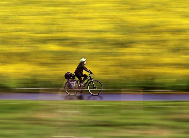 FILE - In this April 18, 2017 file photo a woman rides her bike along a field of rape in Frankfurt, Germany. (AP Photo/Michael Probst, file)